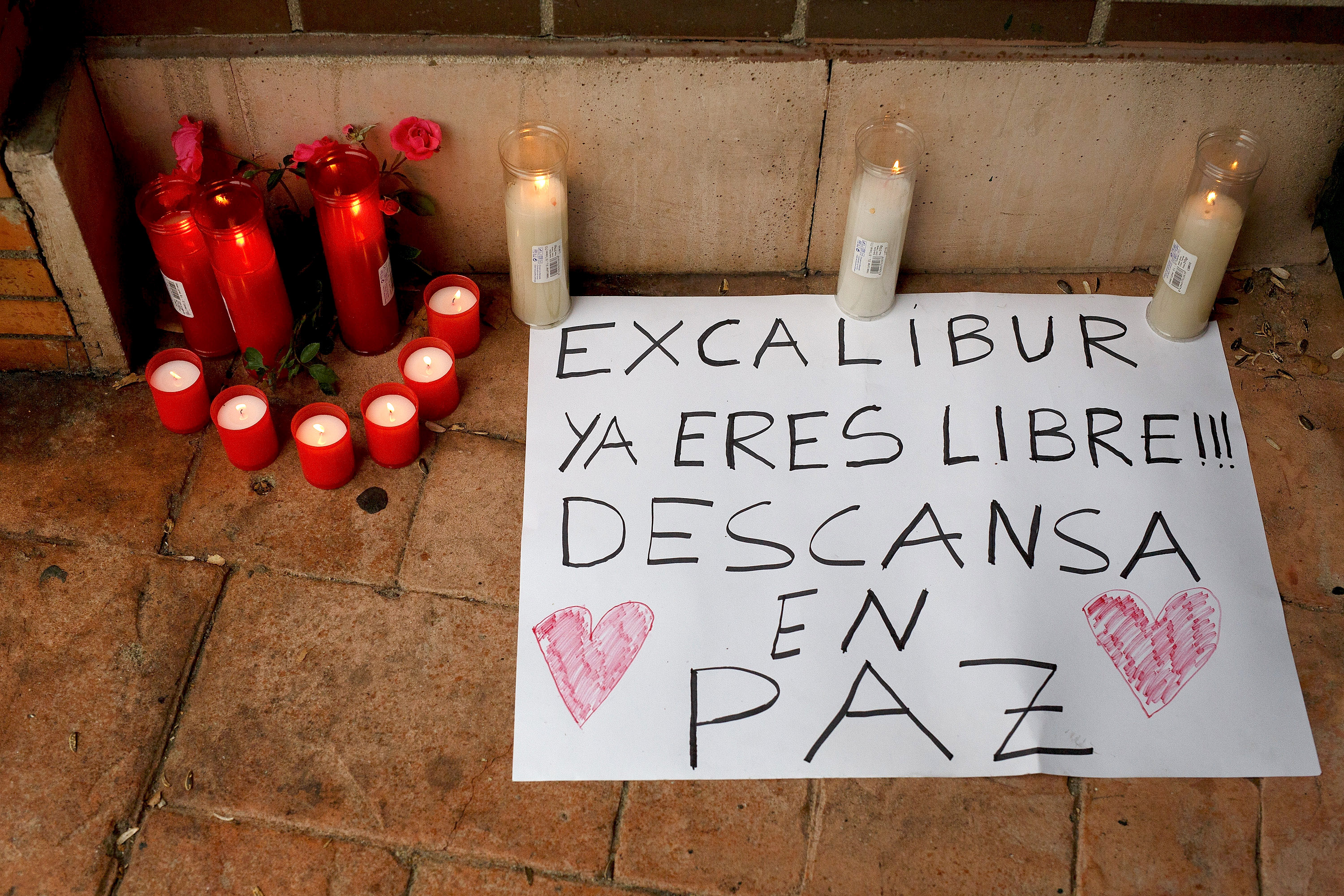 Candles and a message reading 'Excalibur. You are free now. Rest in peace' lay on the ground in memory of dog named 'Excalibur' outside the apartment building, the private residence for Spanish nurse Teresa Romero who has tested positive for the Ebola virus on October 9, 2014 in Alcorcon, near Madrid, Spain.