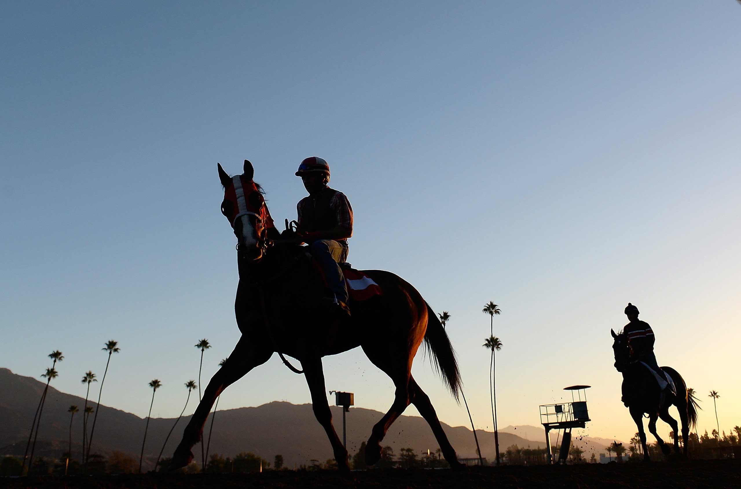 Oct. 29, 2014. Horses train in preparation for the 2014 Breeders' Cup at Santa Anita Park in Arcadia, California.