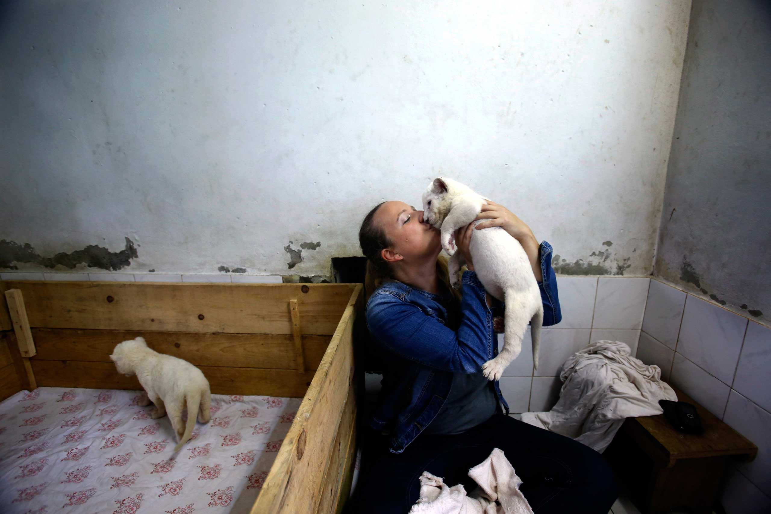 Oct. 17, 2014. Zookeeper Nadezda Radovic kisses a three week old white lion cub at Belgrade Zoo, Serbia. The two white lions cubs, an extremely rare subspecies of the African lion were recently born at the Belgrade Zoo.