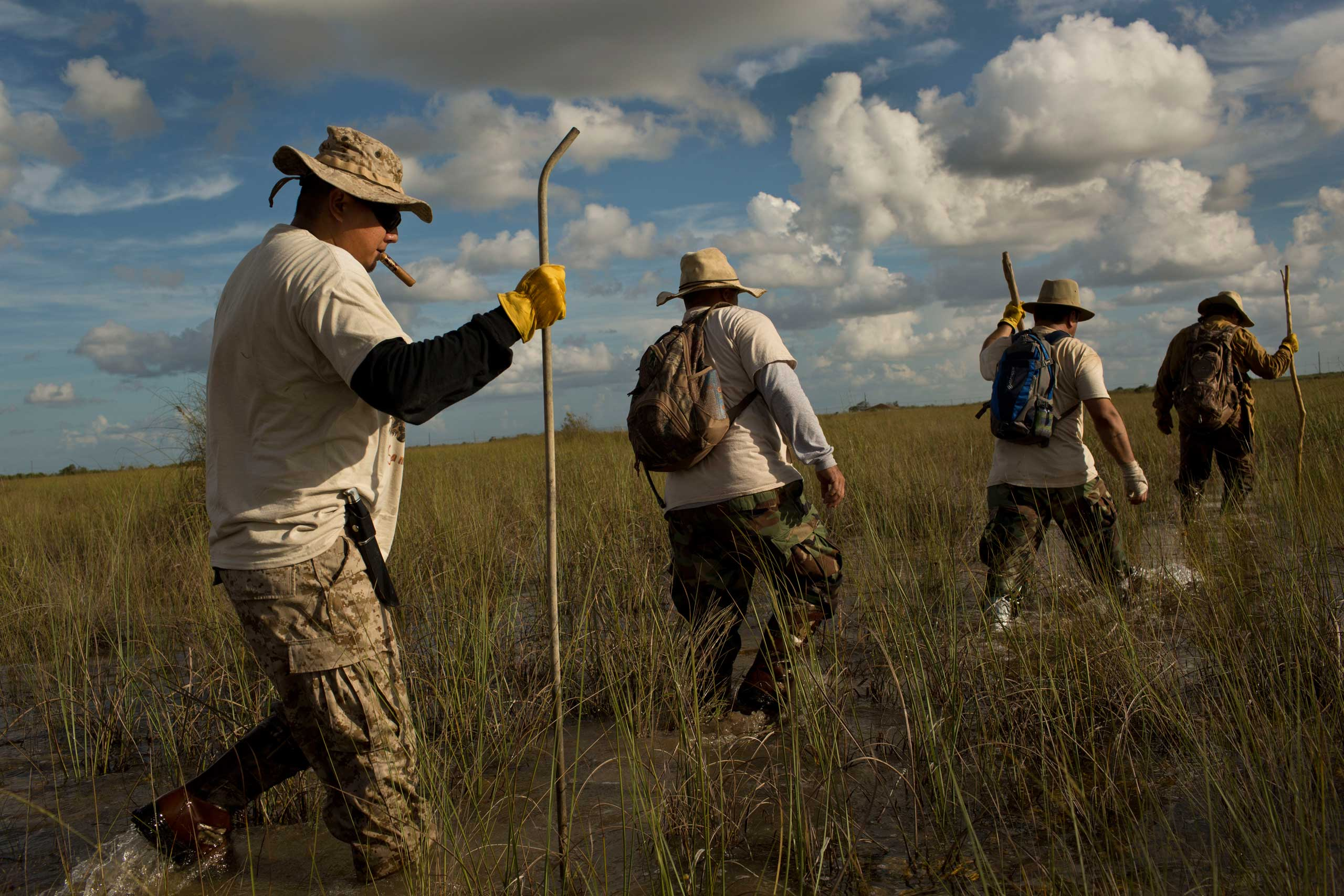 "Volunteer members of the ""Swamp Apes"" patrol through Florida's Everglades National Park searching for invasive pythons in the Chekika area of the park on Saturday Oct. 4, 2014. From left to right are veterans Jose Rodriguez, Jorge Martinez, Alex Nunez, and founder of the group Tom Rahill."