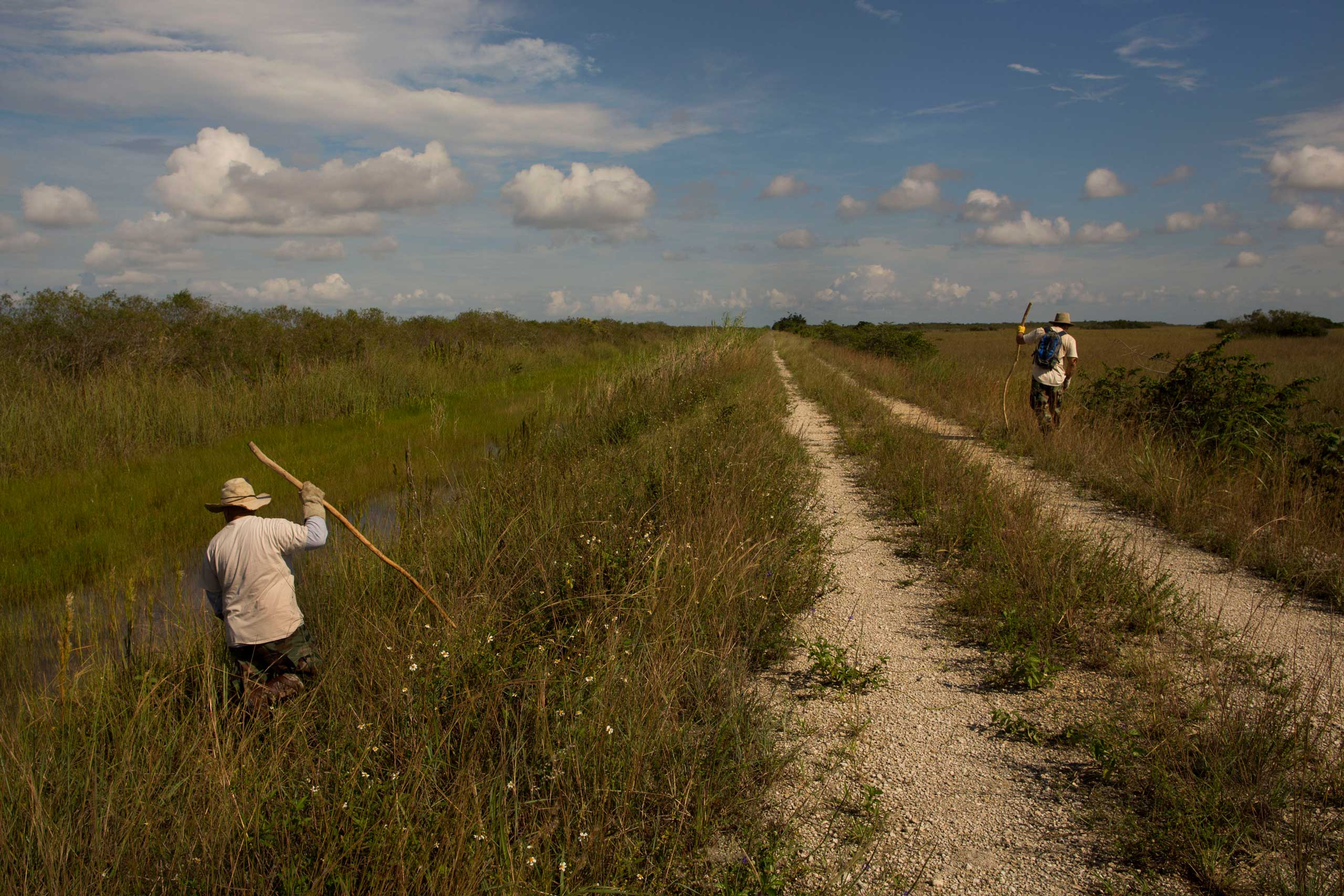 "Volunteer members of the ""Swamp Apes"" patrol through Florida's Everglades National Park searching for invasive pythons in the Shark River Slough area of the park on Saturday Oct. 4, 2014. From left to right are veterans Jorge Martinez and Alex Nunez."