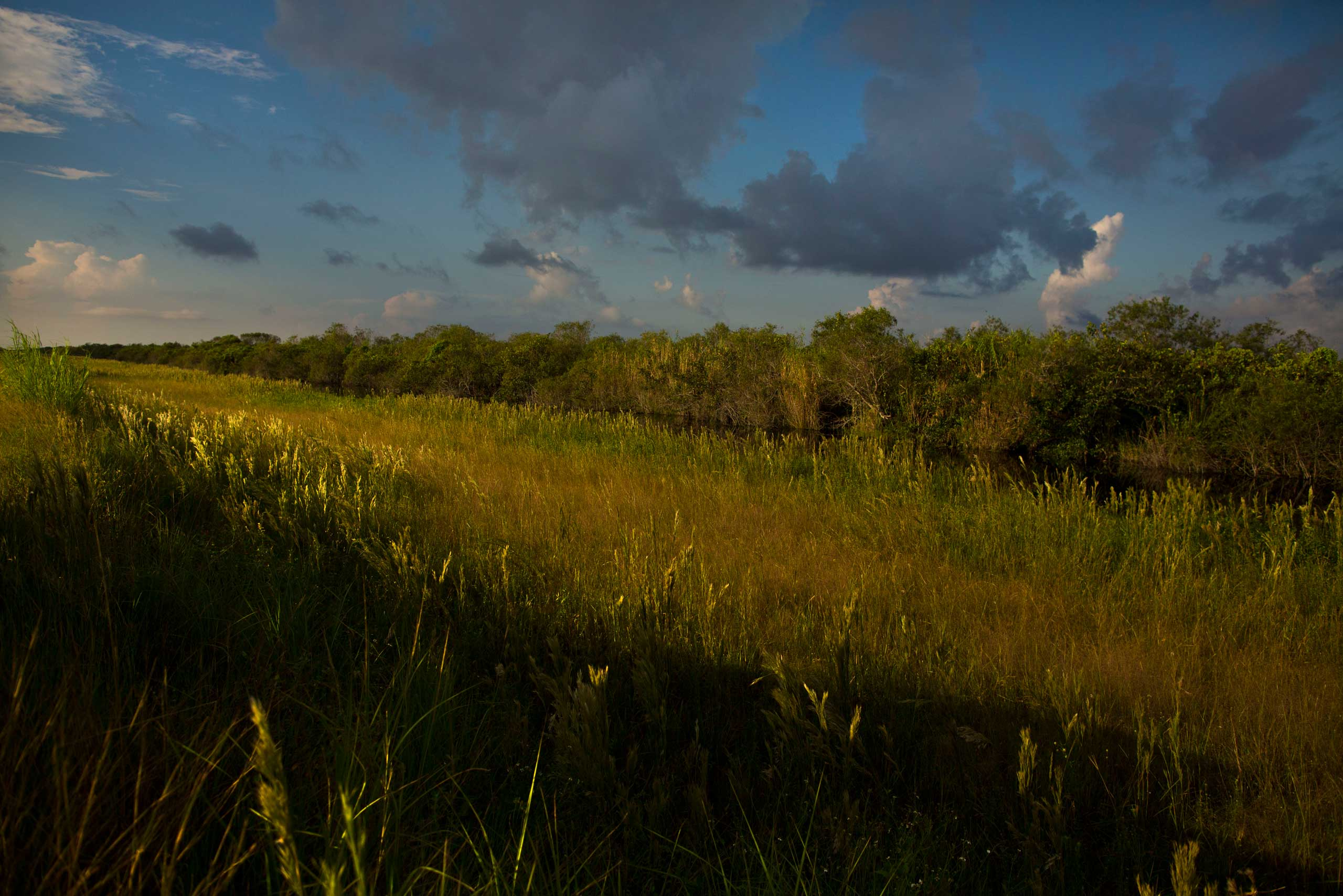 The Shark River Slough area of Florida's Everglades National Park on Saturday Oct. 4, 2014.