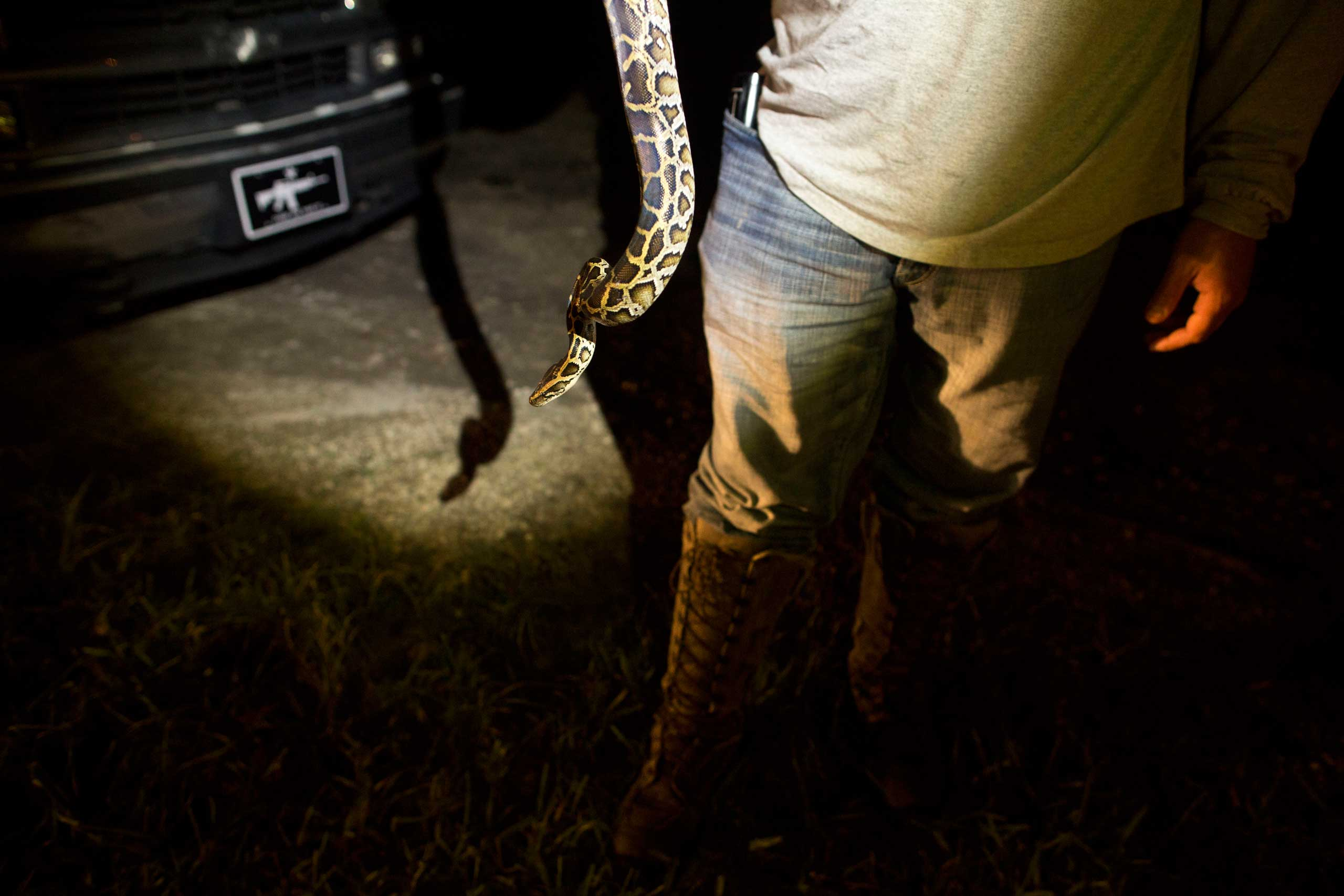 "Veteran and volunteer member of the ""Swamp Apes"" Barry Offenburger holds a captured python as he and fellow members deliver it to a ranger station at Florida's Everglades National Park early morning Sunday Oct. 5, 2014."