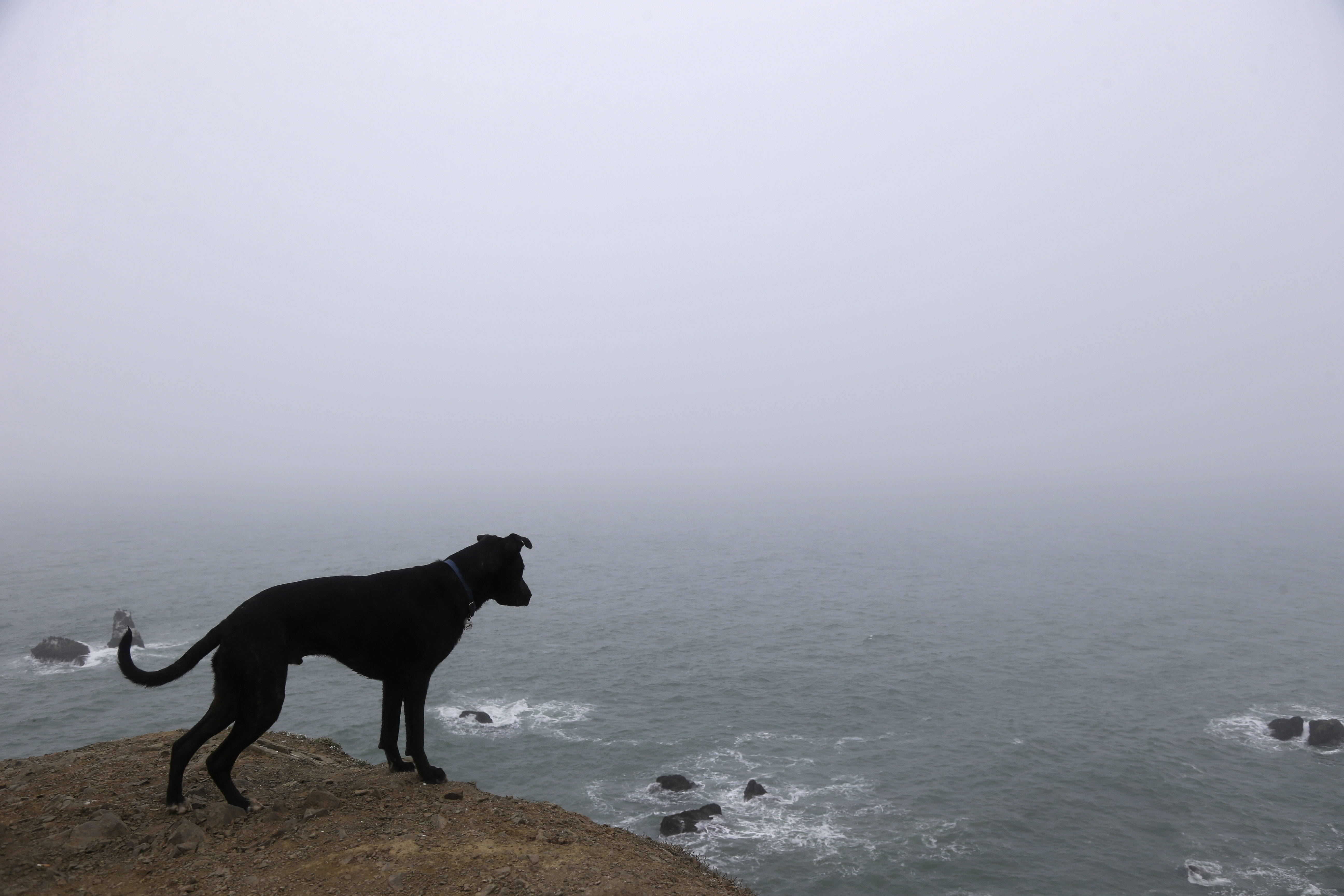 A dog named Avocado looks over a cliff overlooking the fog-covered Pacific Ocean while on a hike on Wednesday, Jan. 8, 2014, in San Francisco.