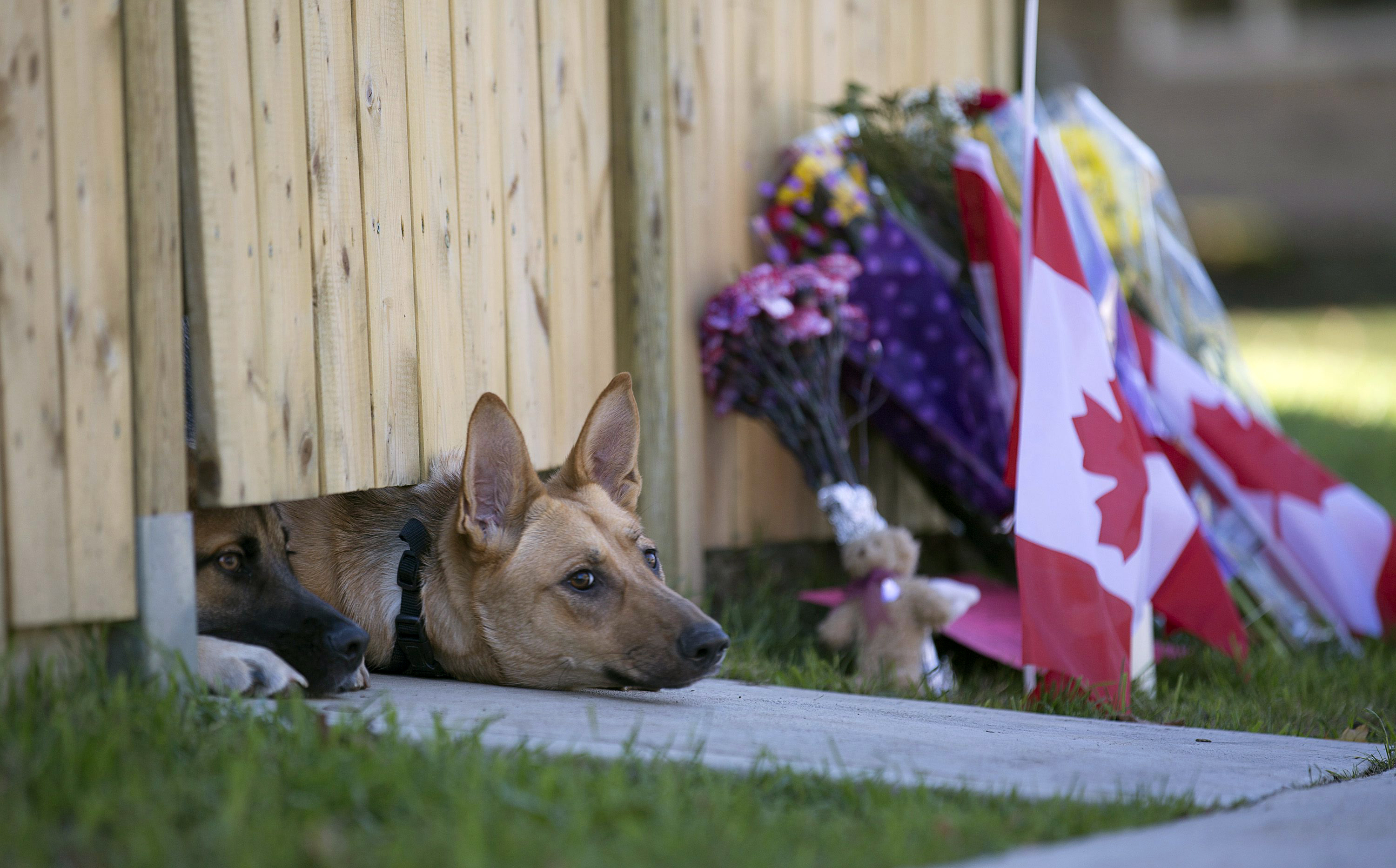 Oct. 23, 2014. Dogs peek out from under a gate at the Cirillo family home in Hamilton, Ontario near flowers and flags that have been left on Thursday,