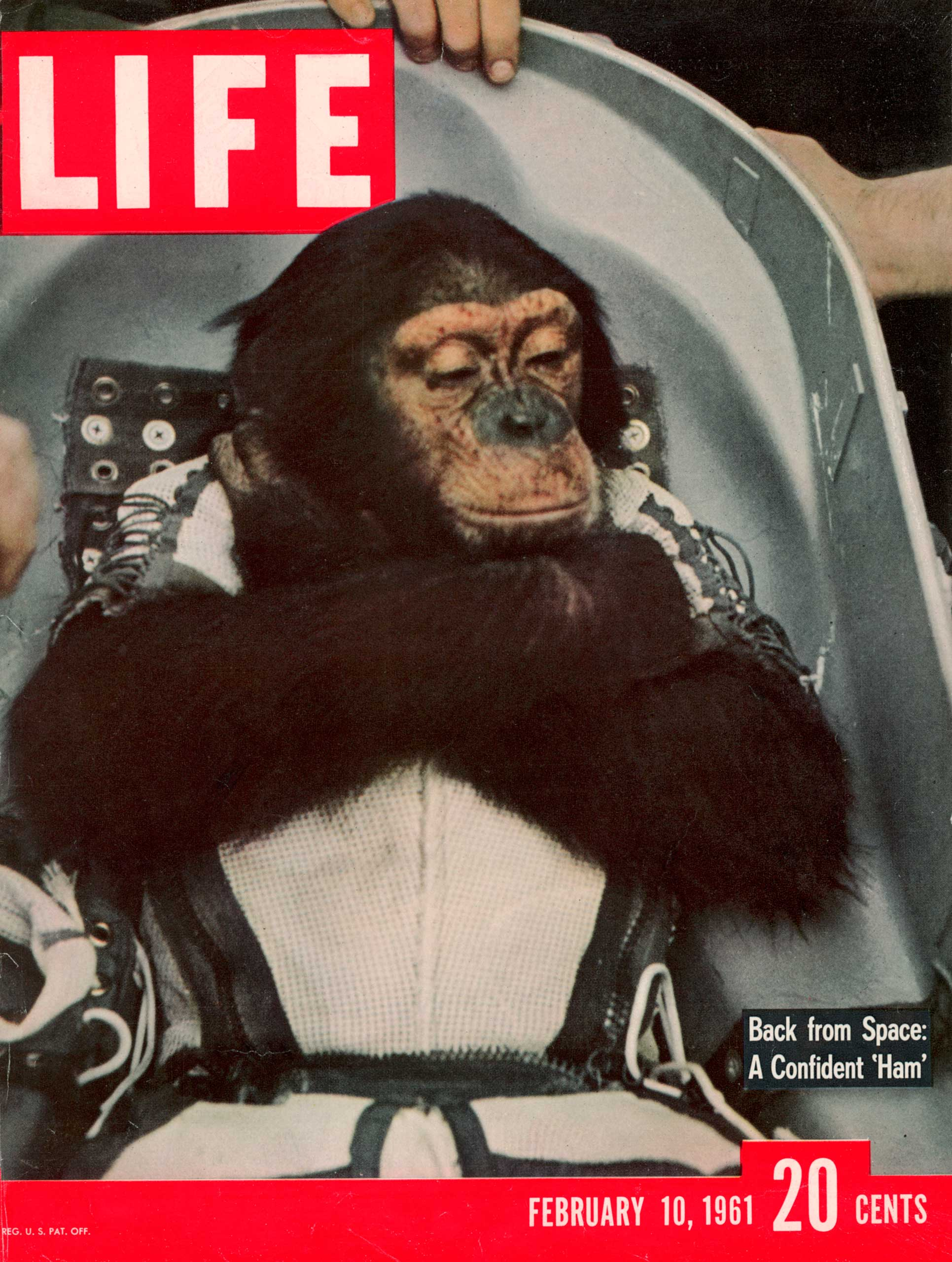 LIFE cover, Feb. 10, 1961. Ham the Chimpanzee in the space capsule after returning from the Mercury Redstone 2 space flight.