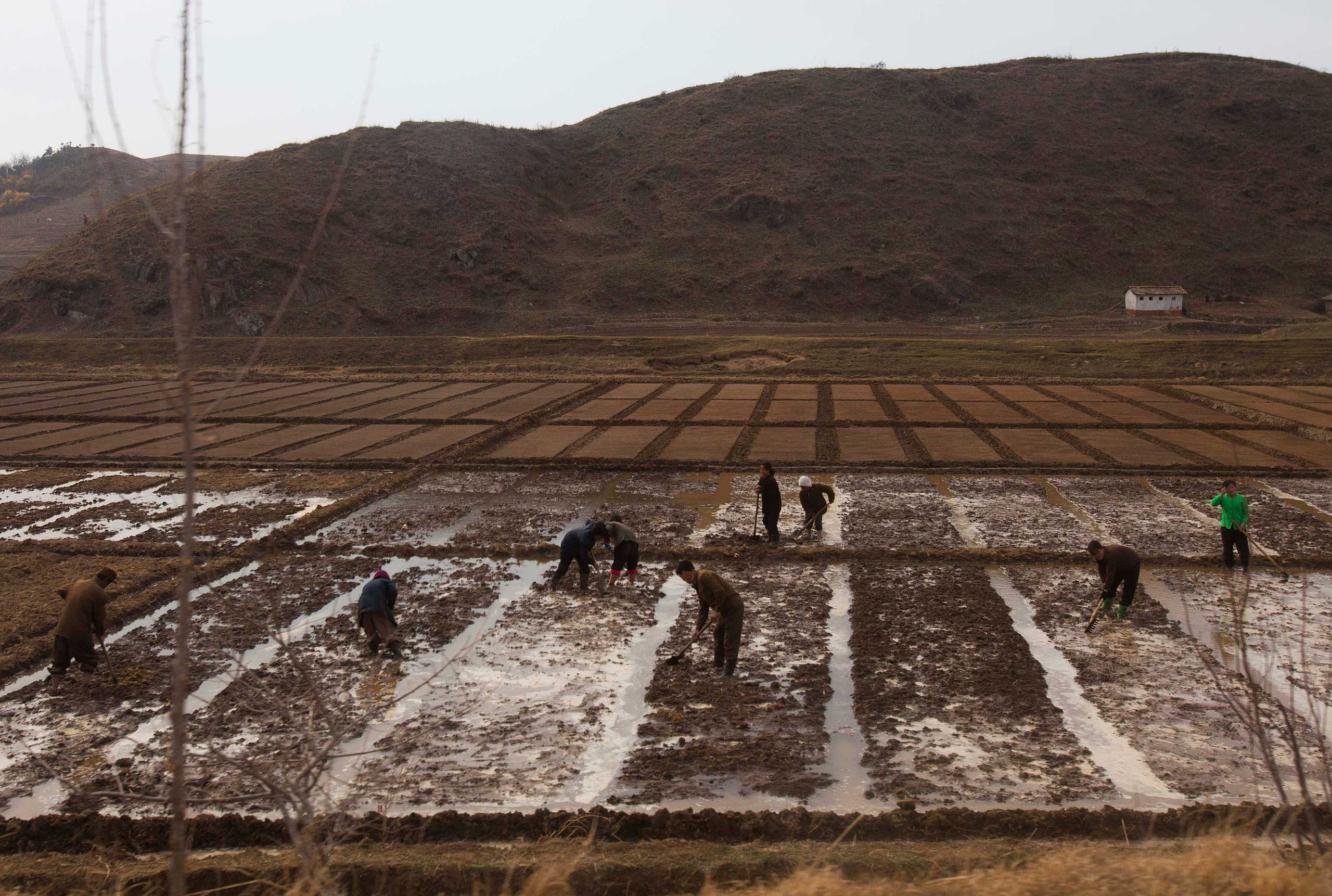 April 17, 2011. People work in a field outside of Kaesong, North Korea.