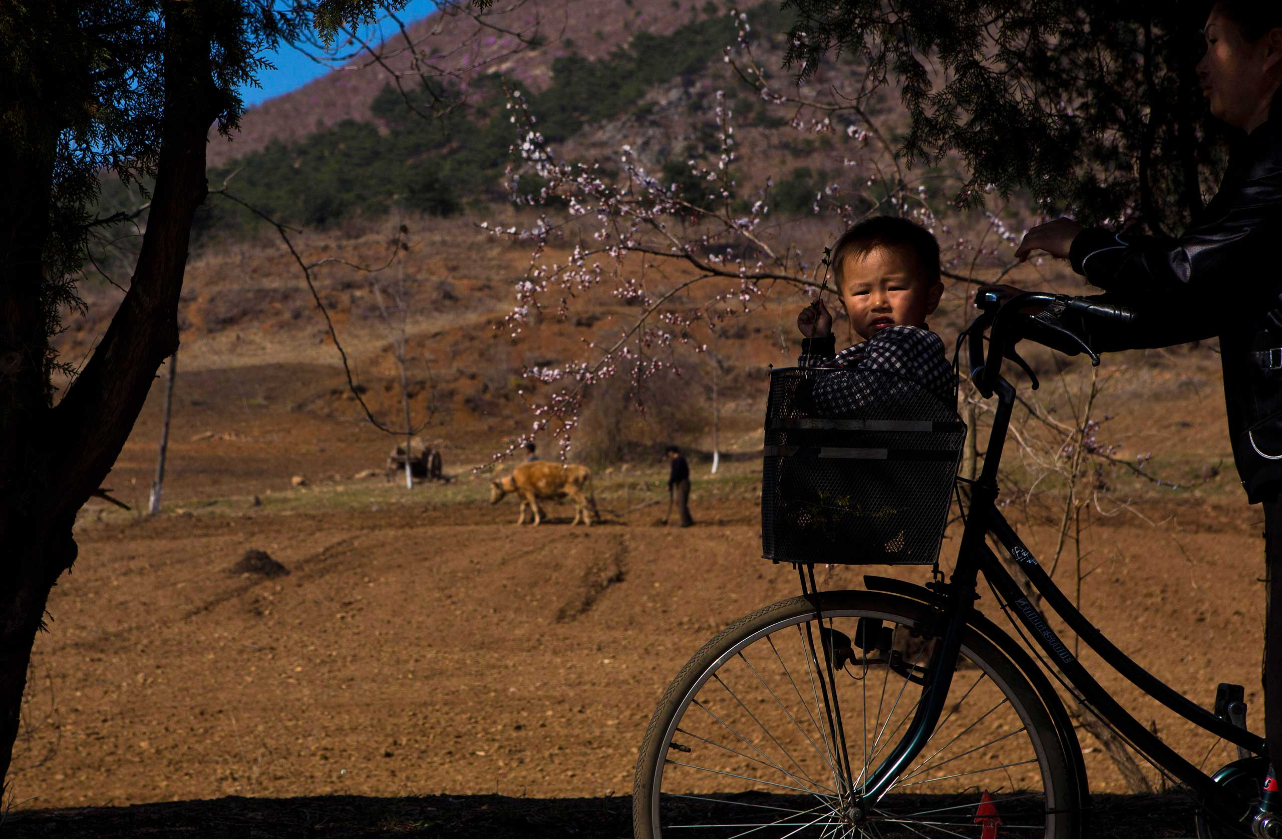 April 24, 2013. A North Korean boy rides in a bicycle basket on a road north of Kaesong, North Korea.