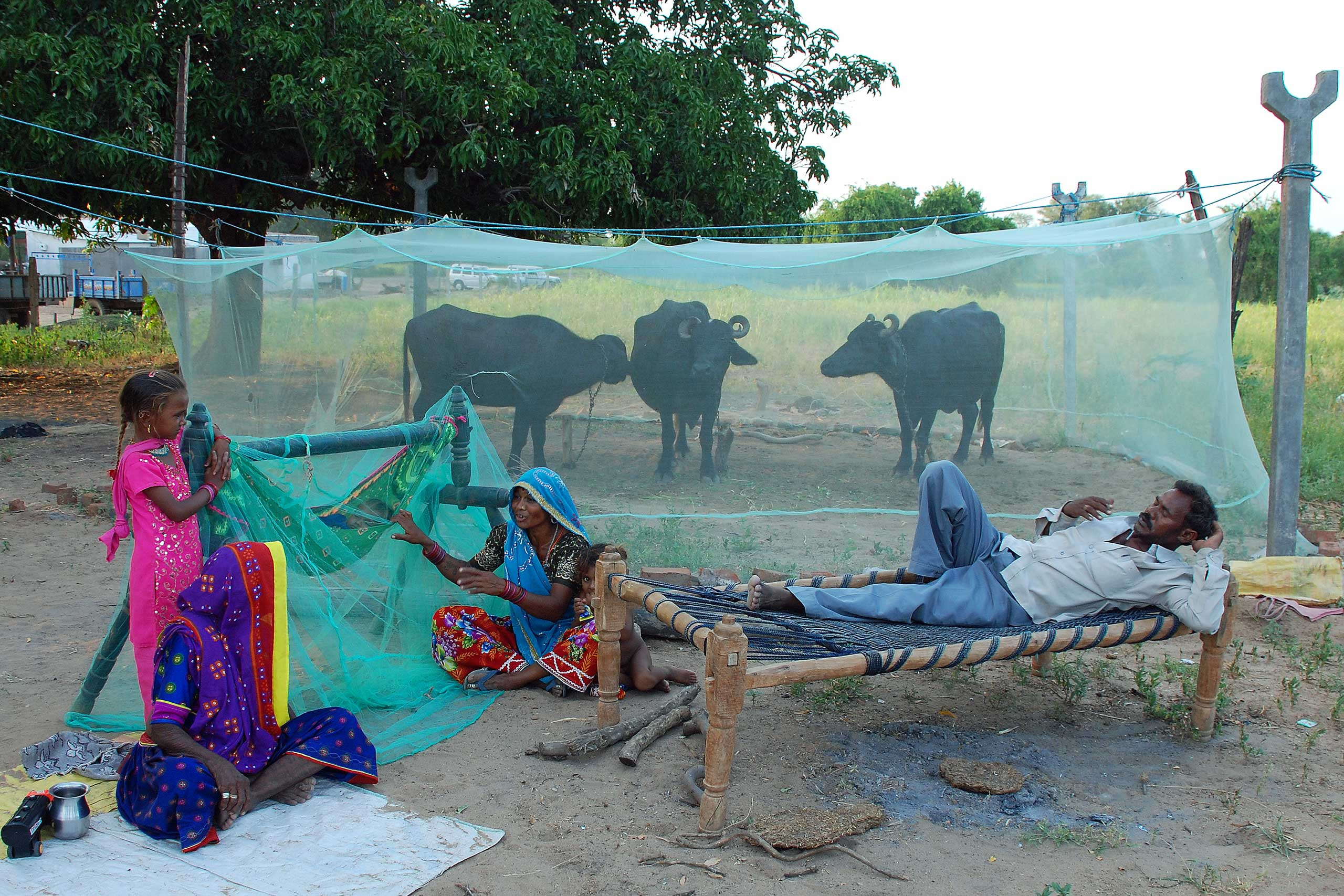 A farmer protects his family and animals from mosquitos in Gujarat, India.