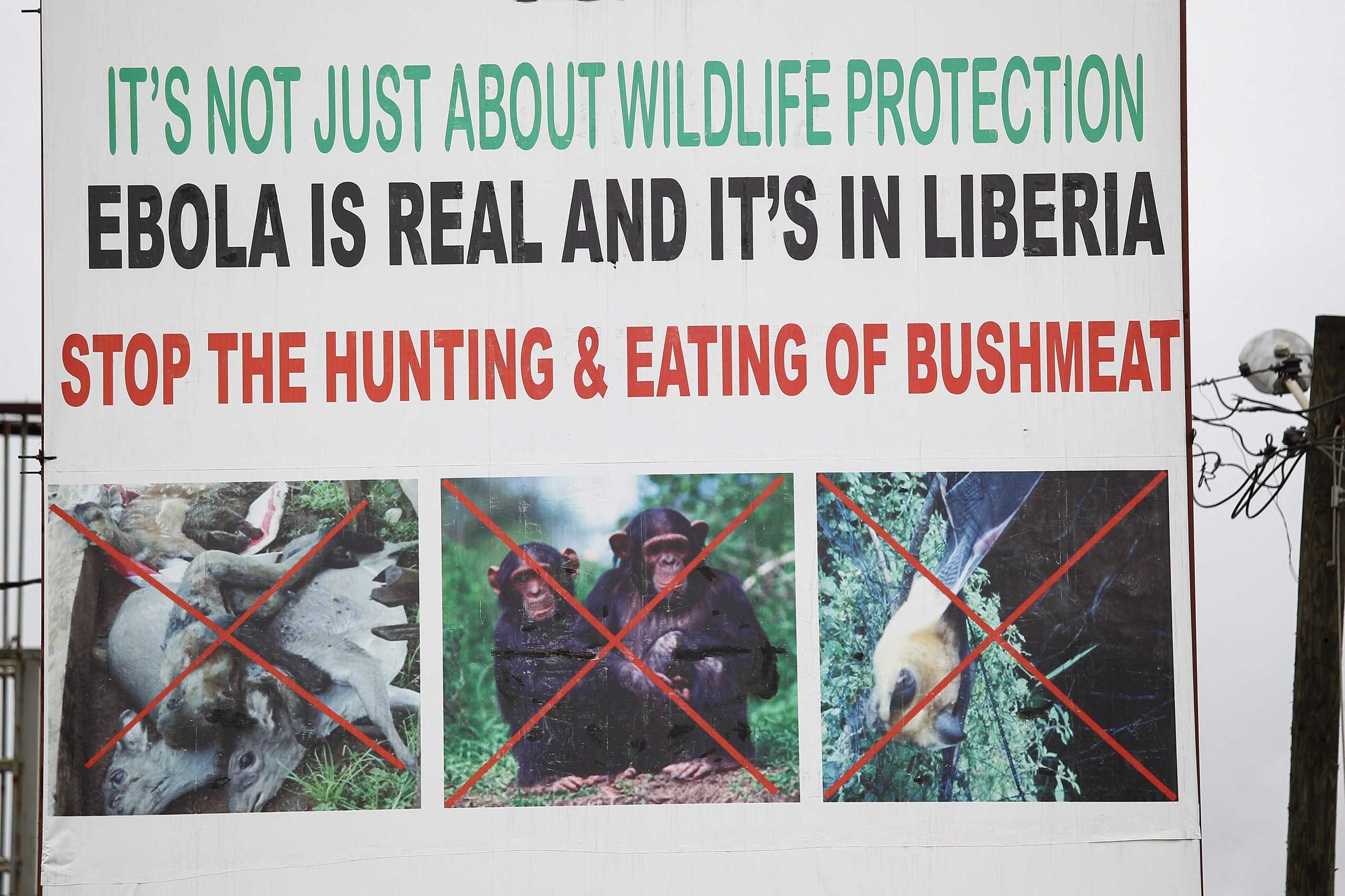 A billboard warning against eating wild animals, seen in Monrovia, Liberia, Oct. 6, 2014.