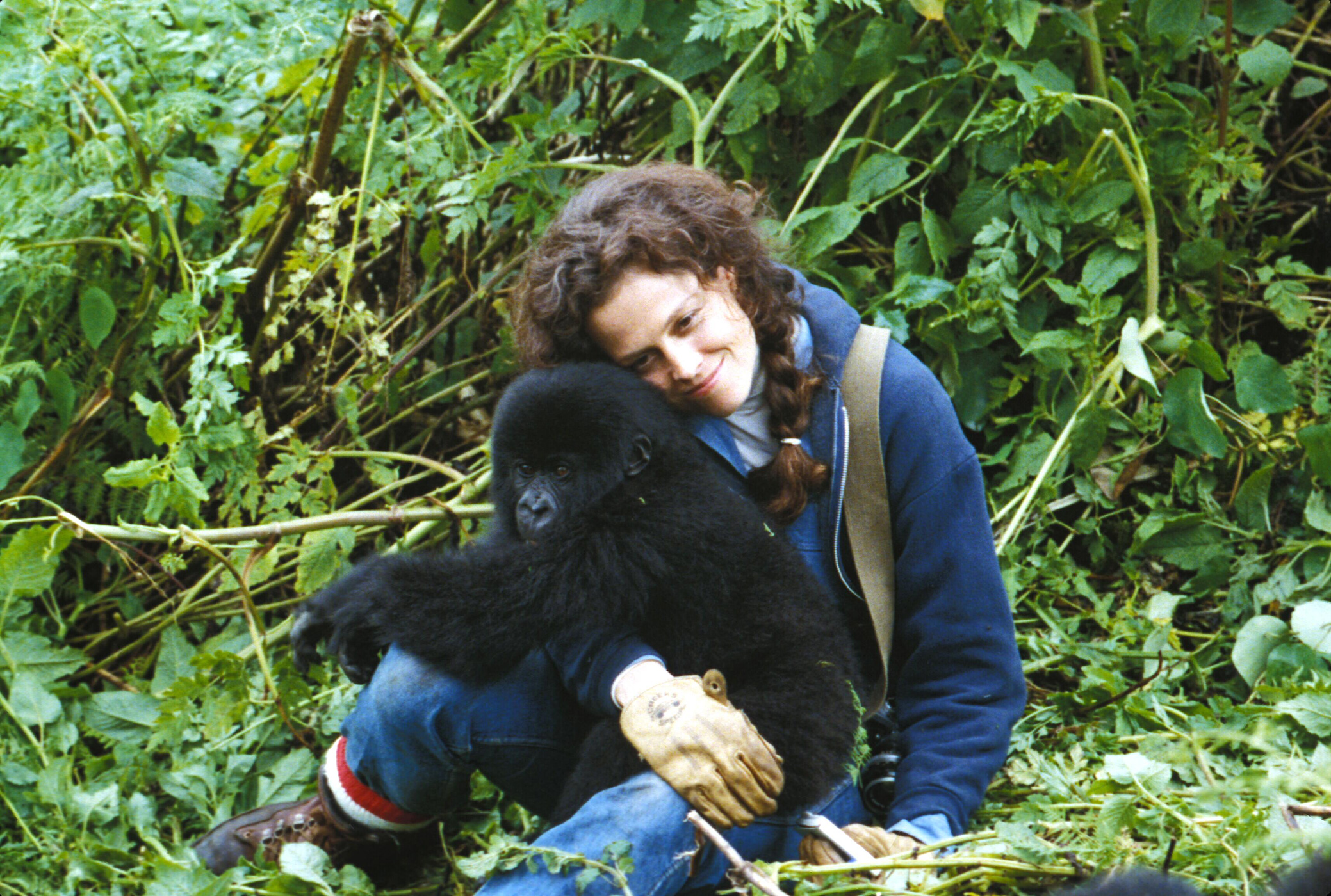 Weaver brought the true story of renowned primatologist Dian Fossey, who was mysteriously murdered in 1985, to the big screen in 1988's Gorillas in the Mist.