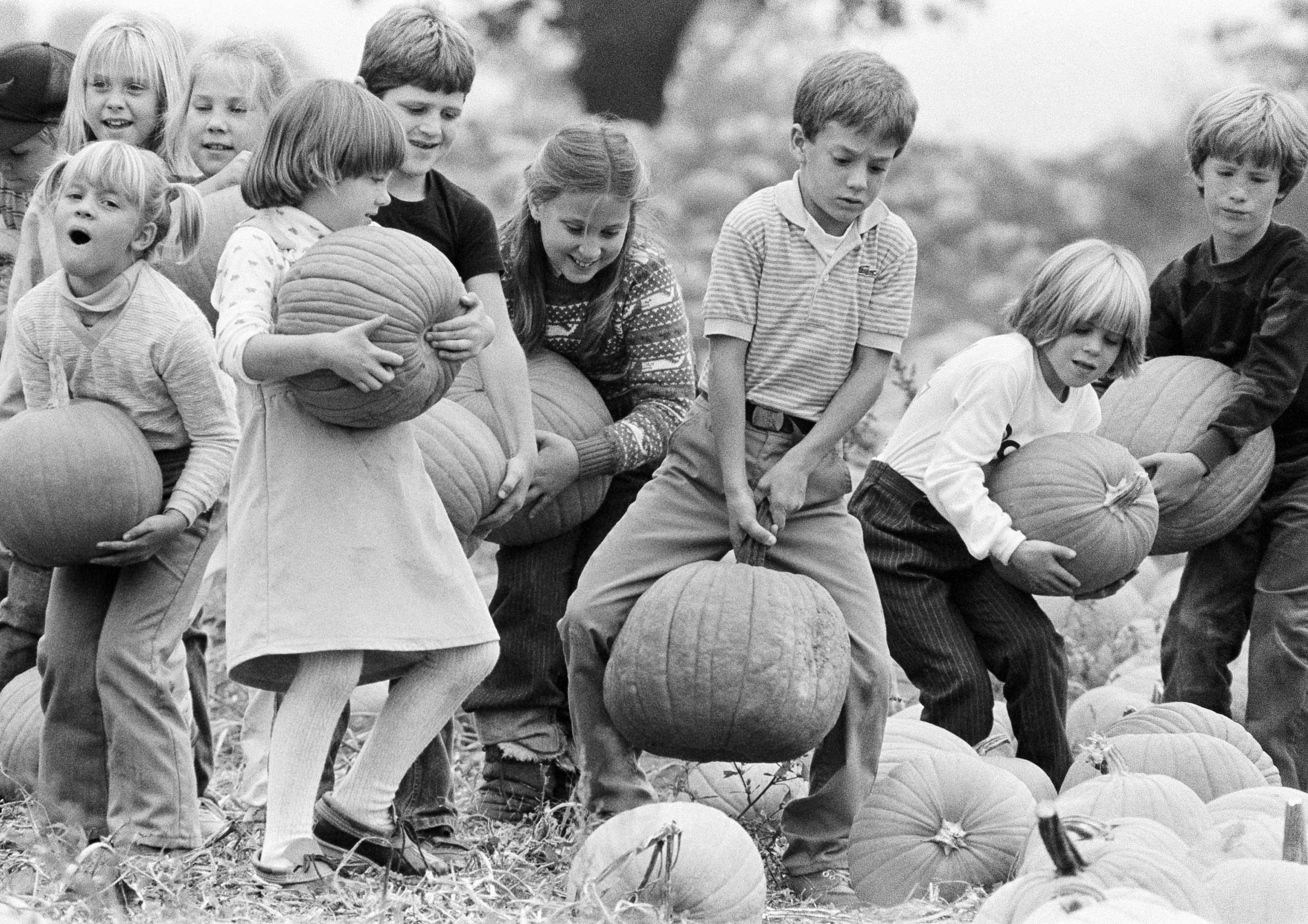 Second-graders pick their pumpkins during a class outing Oct. 19, 1984, at a farm next to their school near Doylestown, Pa.