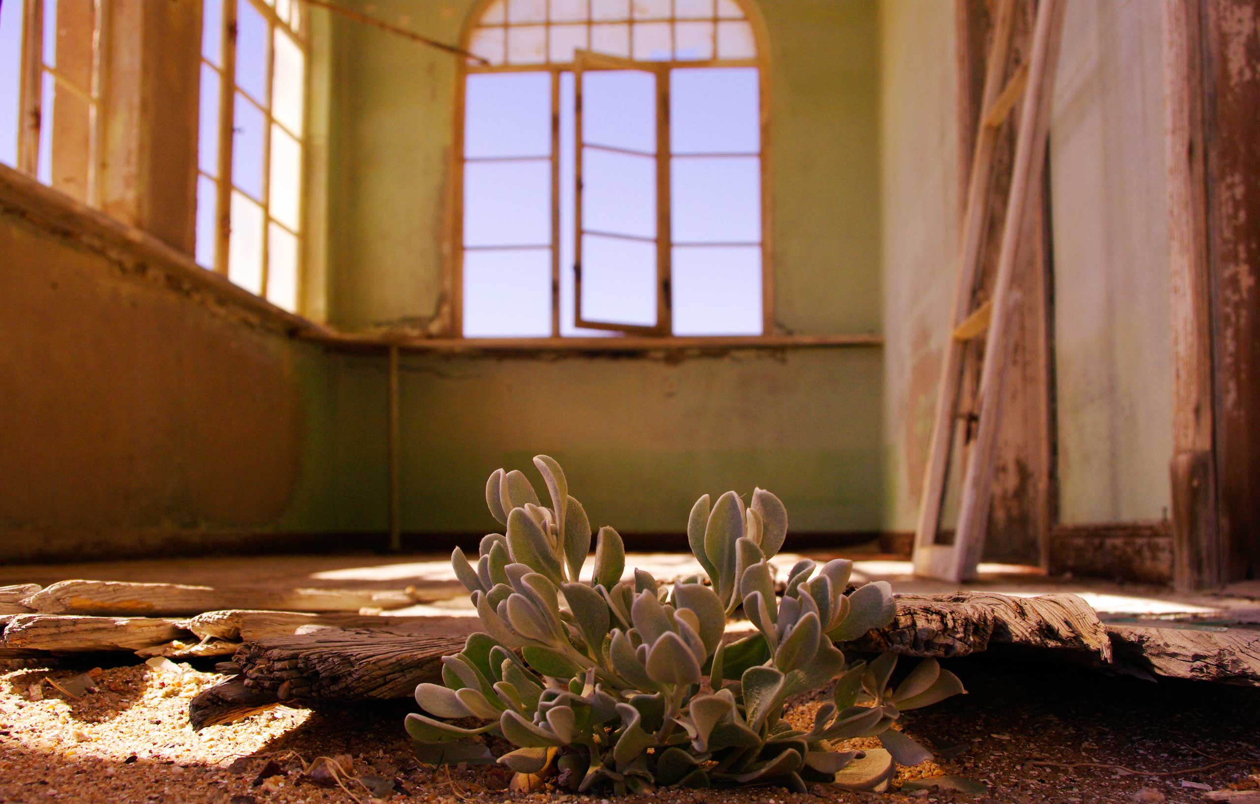 A plant takes advantage of the available shelter in a dilapidated house in Kolmanskop, Namibia.