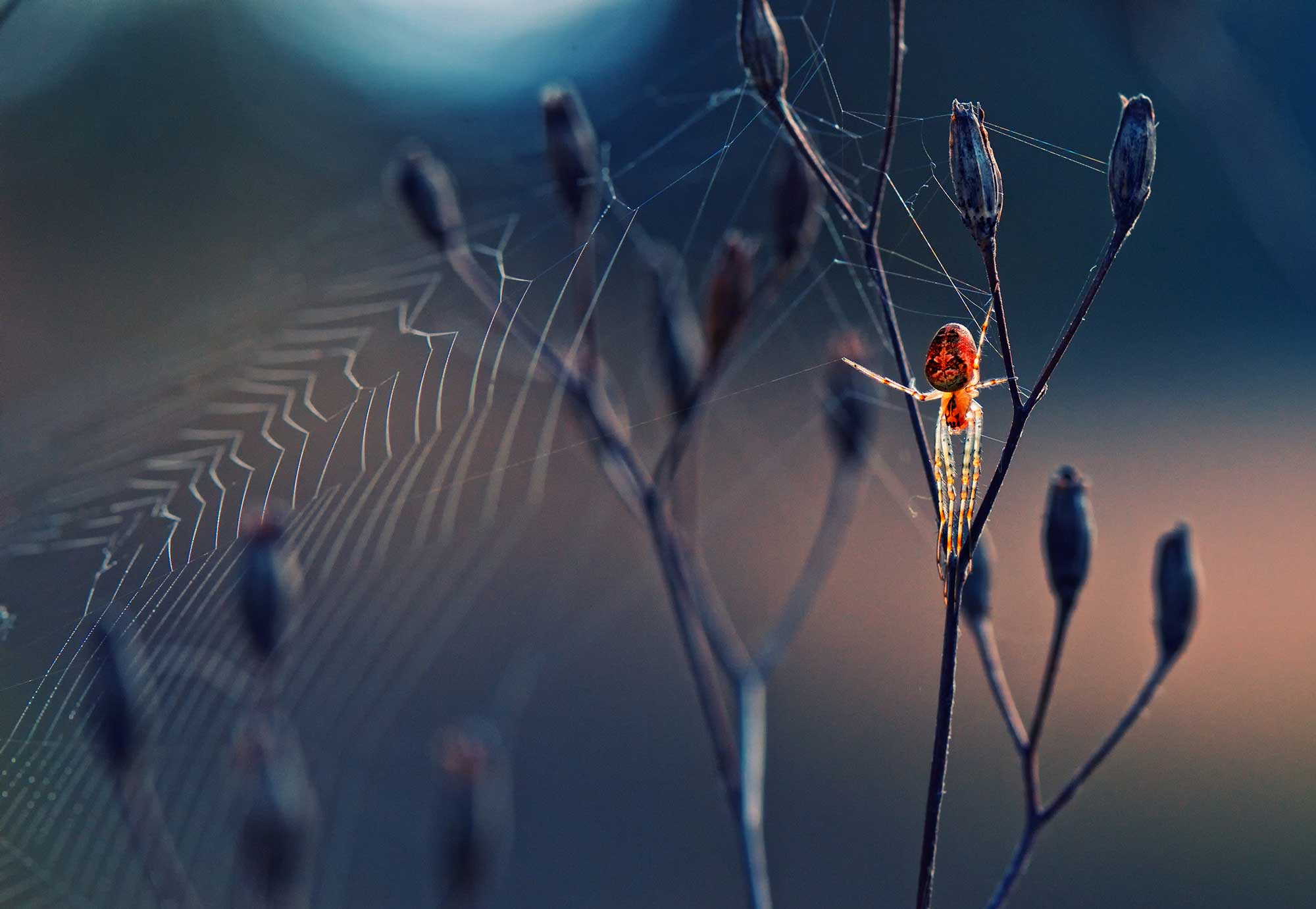 A spider at sunset in Predel, Bulgaria.