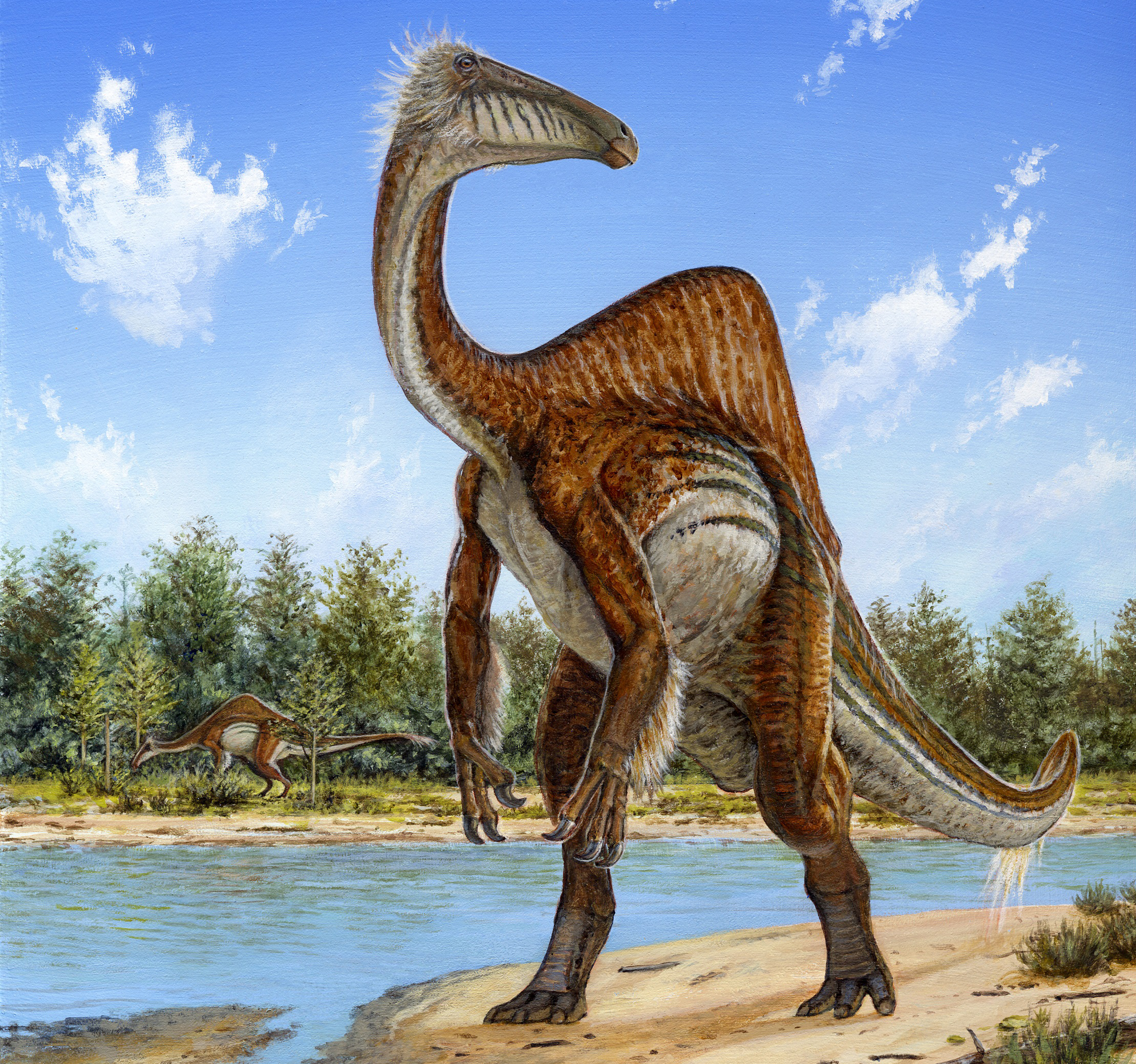 This undated handout image provided by Michael Skrepnick, Dinosaurs in Art, Nature Publishing Group, shows a deinocheirus