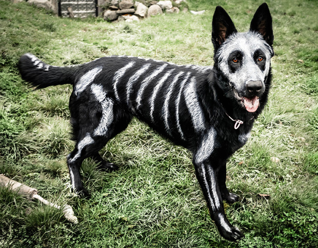 The Painted Skeleton Dog Nixe