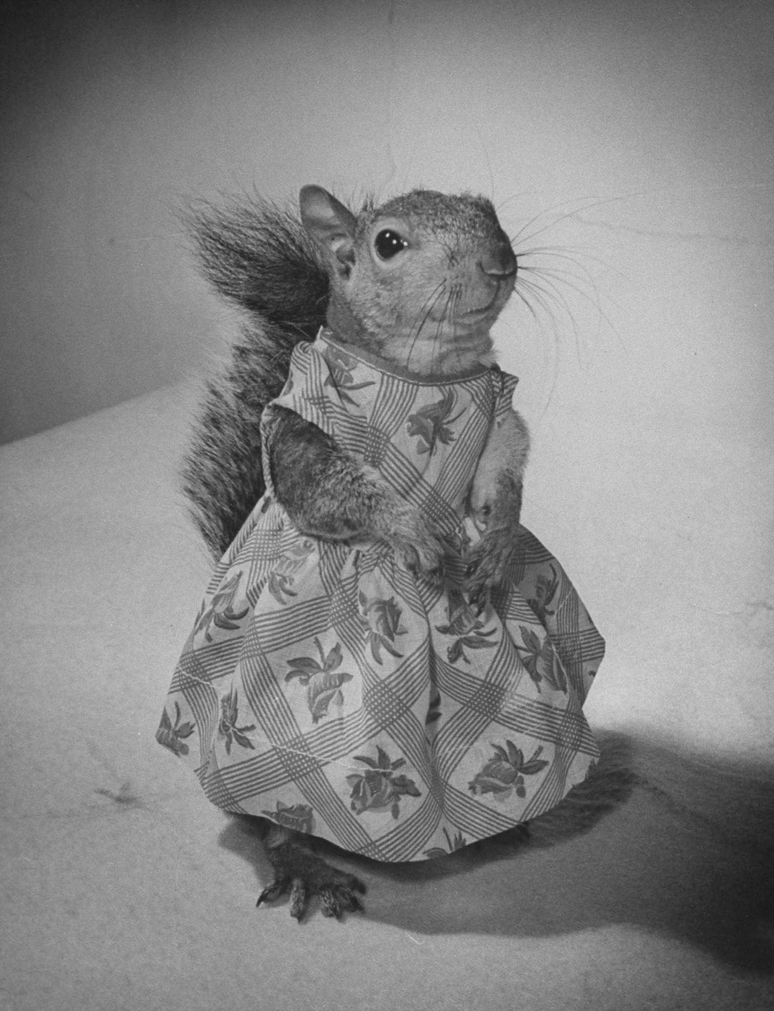 """The """"Little Squirrel on the Prairie"""" Look"""