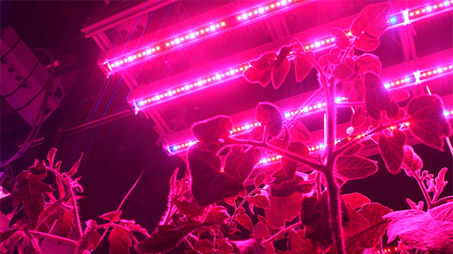 Plants grow in the Aeroponics lab at MIT's CITYFarm