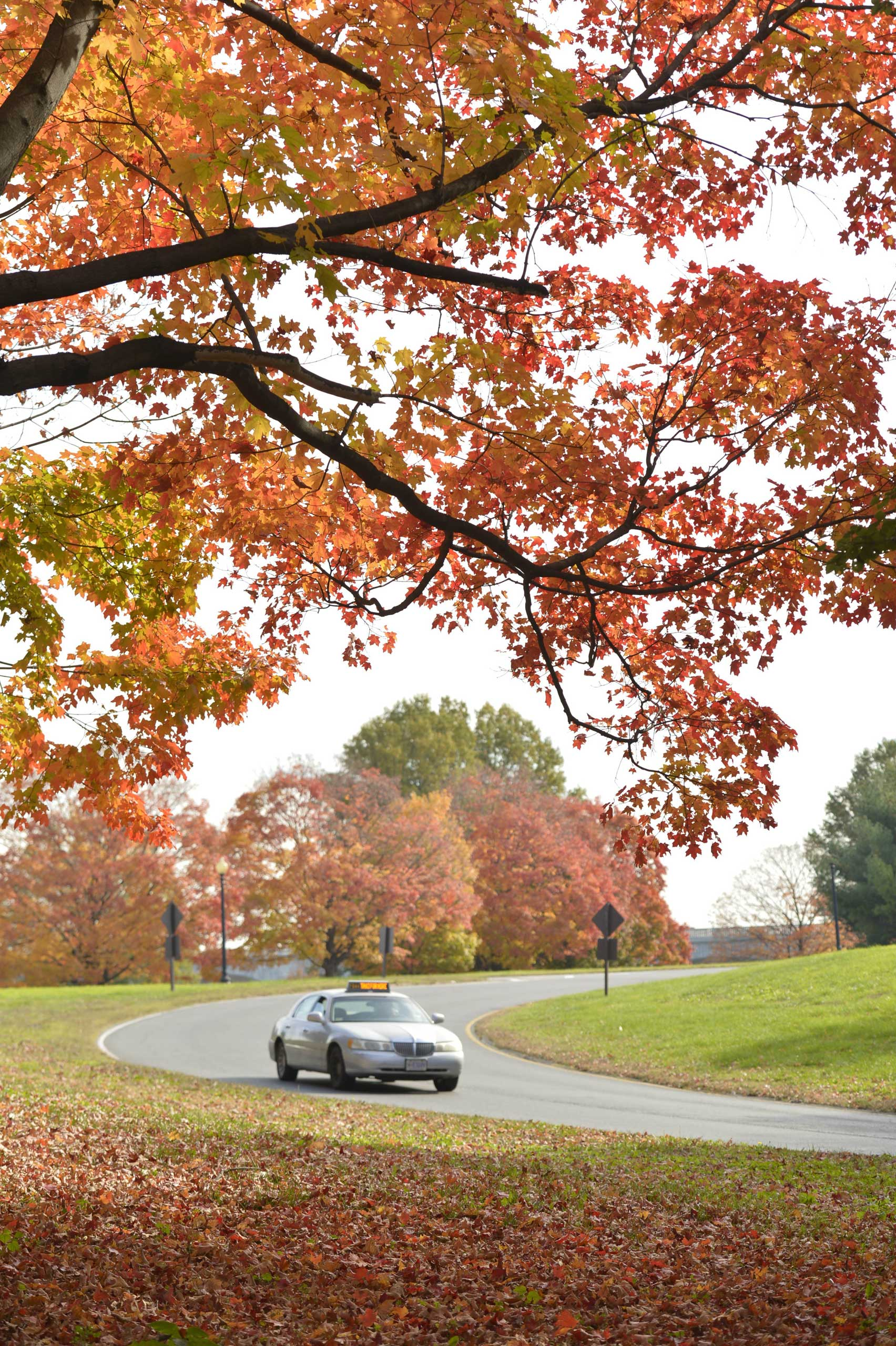 A car runs past fall foliage in Washington D.C., capital of the United States, on Oct. 28, 2014.