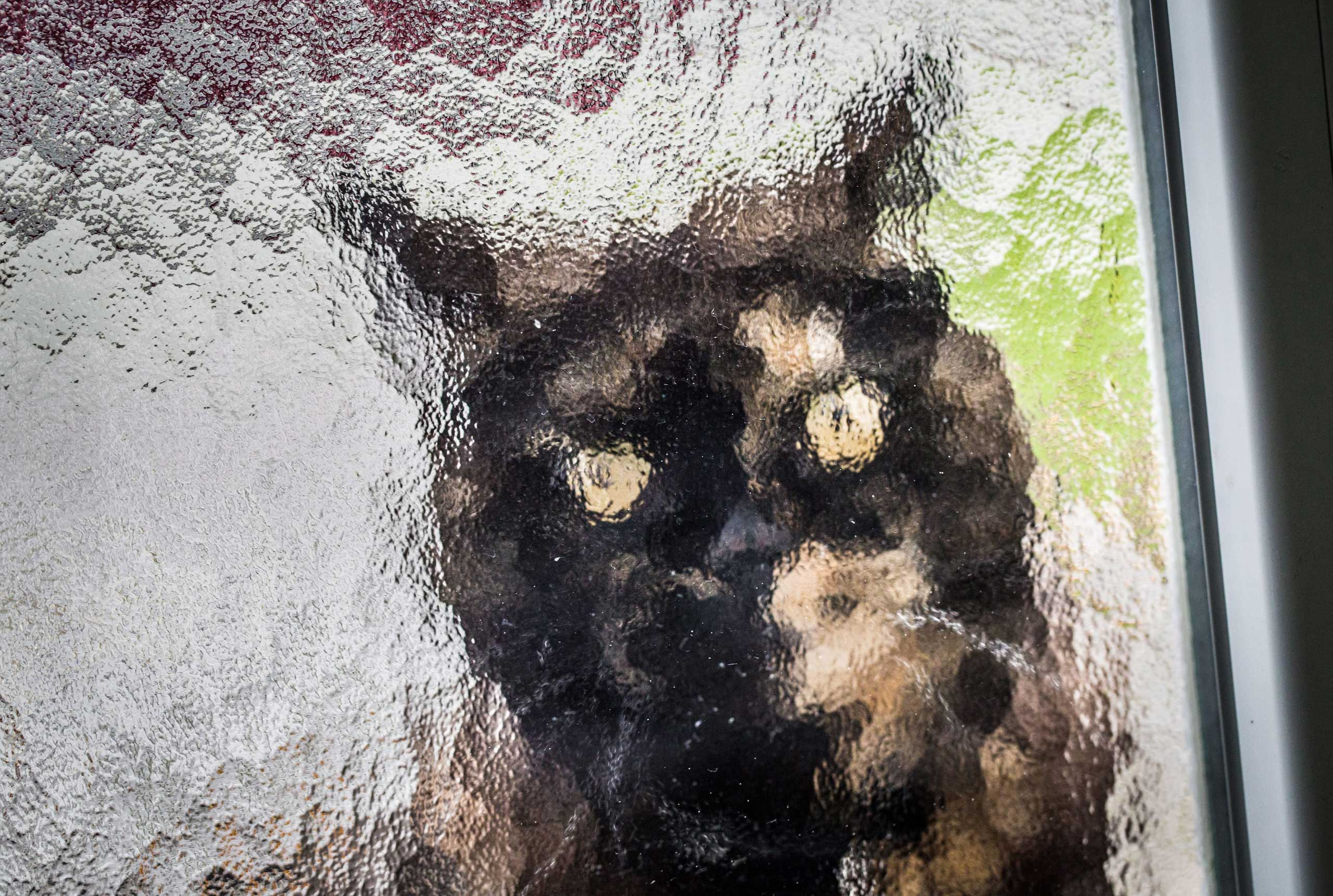 Nov. 3, 2014. A cat sits behind a glass pane in the front door waiting to be let in from the rain in Frankfurt.