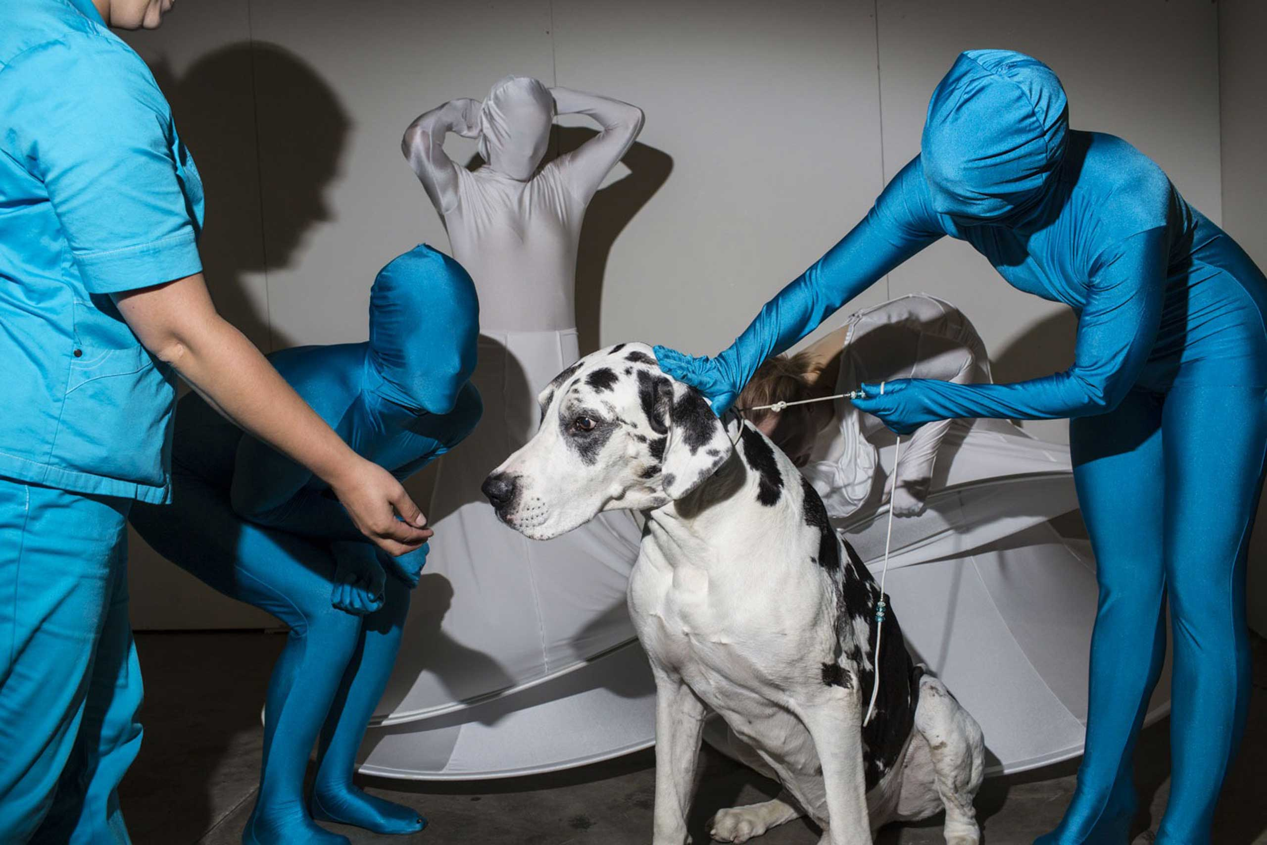 Kaapo, a nine year old Great Dane from Finland, meets performers from the Helsinki dance group High Heels backstage during the first day of the 2014 World Dog Show on Friday, August 8th, 2014, in Helsinki, Finland.From  Hounds of Helsinki: Behind the Scenes of the 2014 World Dog Show