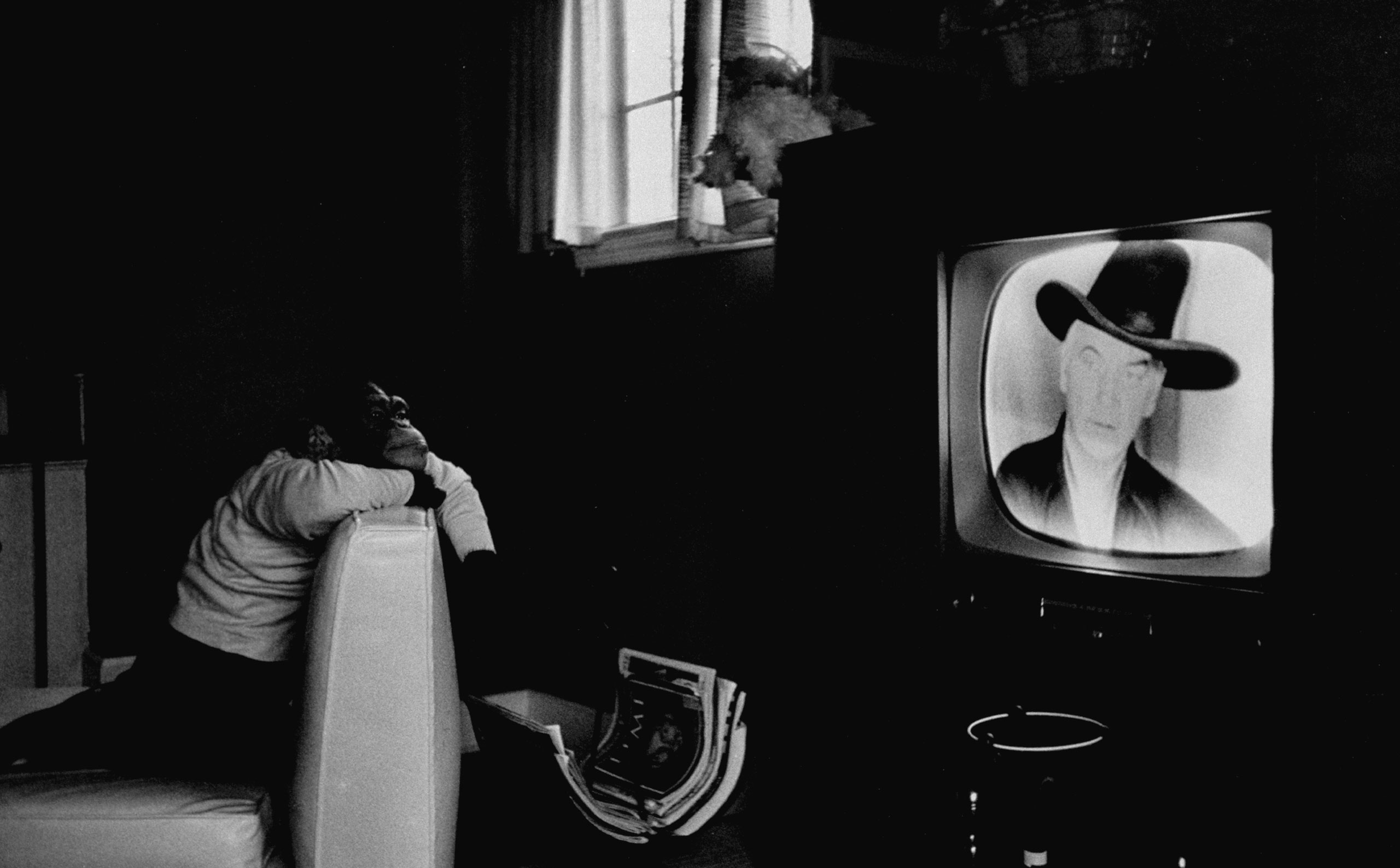 A performing chimpanzee named Zippy watches TV in 1955.