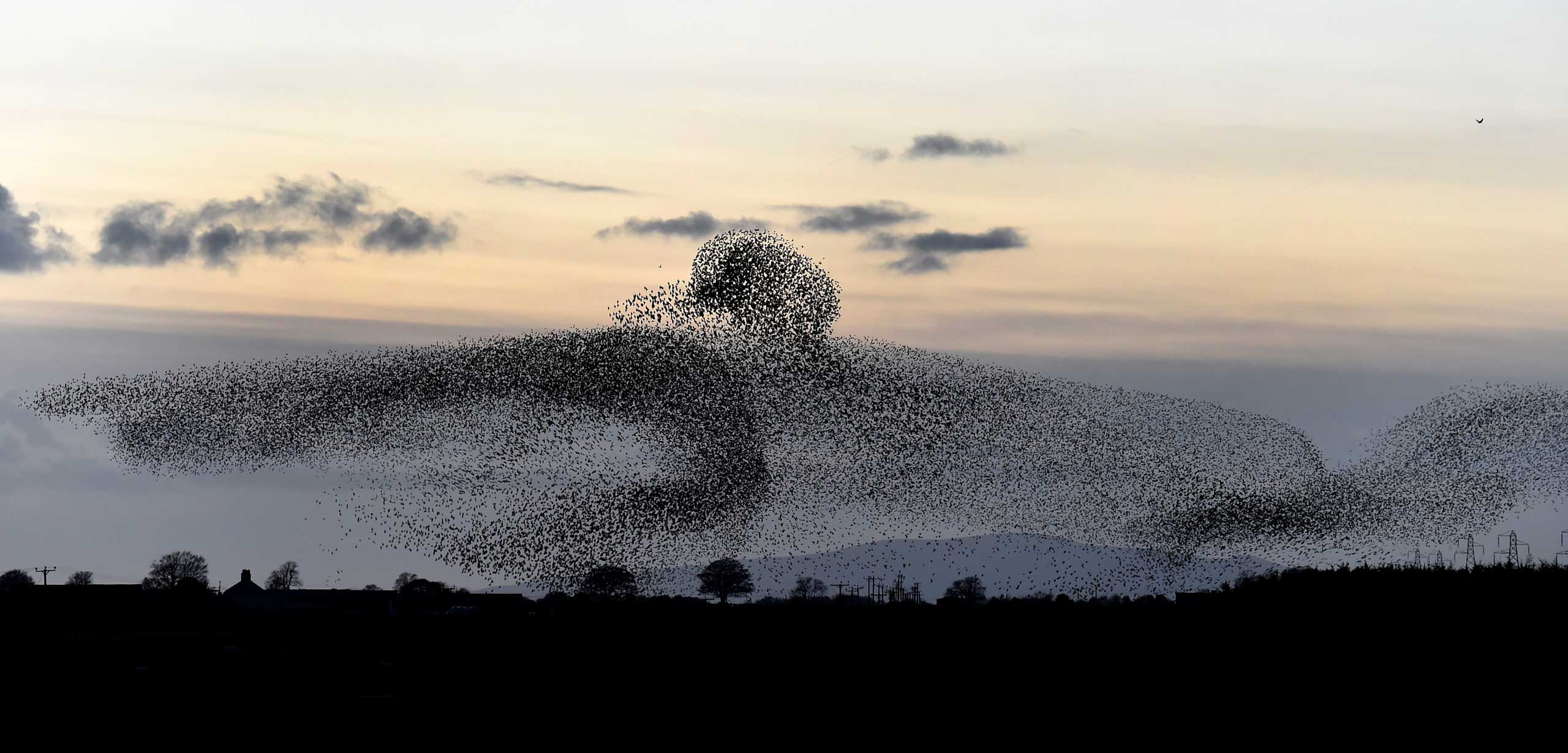 Nov. 5, 2014. Starlings in the Scottish Borders. Tens of thousands of starlings start their murmuration, with Criffel mountain in the background, as dusk falls near Gretna Green on the England and Scotland border.