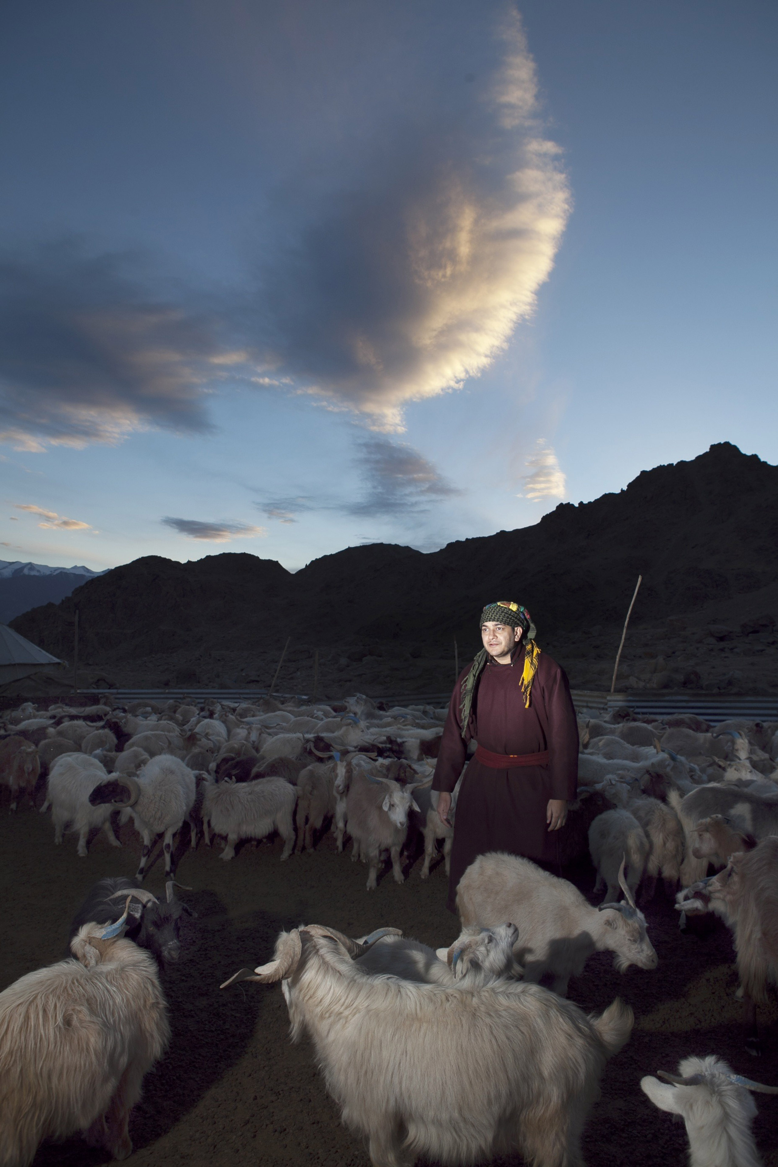 Babar Afzal in Stakmo village, situated on the outskirts of Leh. He helps Tsering Dolma with her daily chore of rounding up the goats, counting them and securing for the night.