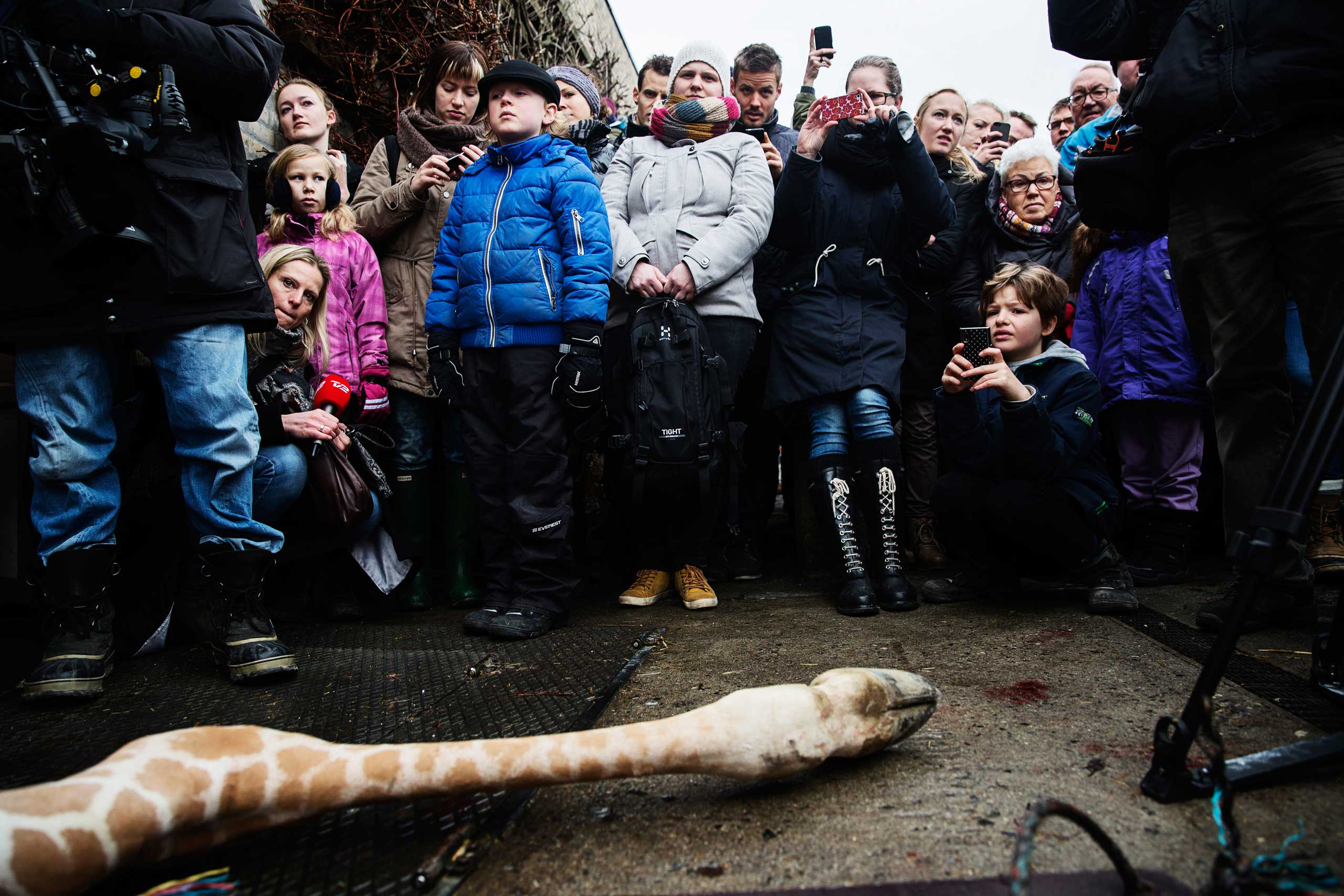 People look at the carcass of the giraffe Marius after it was killed in Copenhagen Zoo, Feb. 9, 2014.