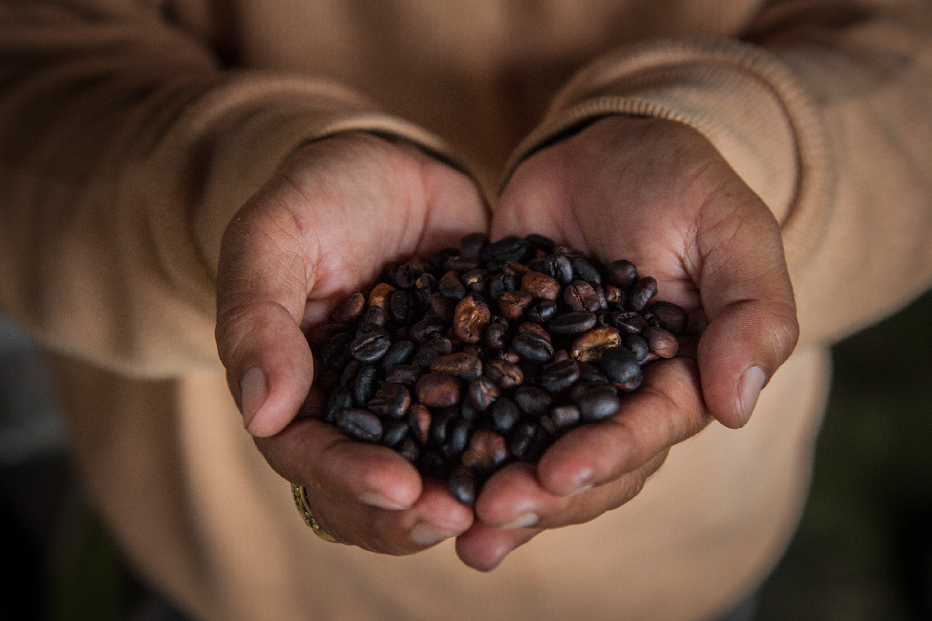 A man holds up roasted Kopi Luwak coffee seeds inside a 'Kopi Luwak' or Civet coffee farm and cafe on May 27, 2013 in Tampaksiring, Bali, Indonesia.