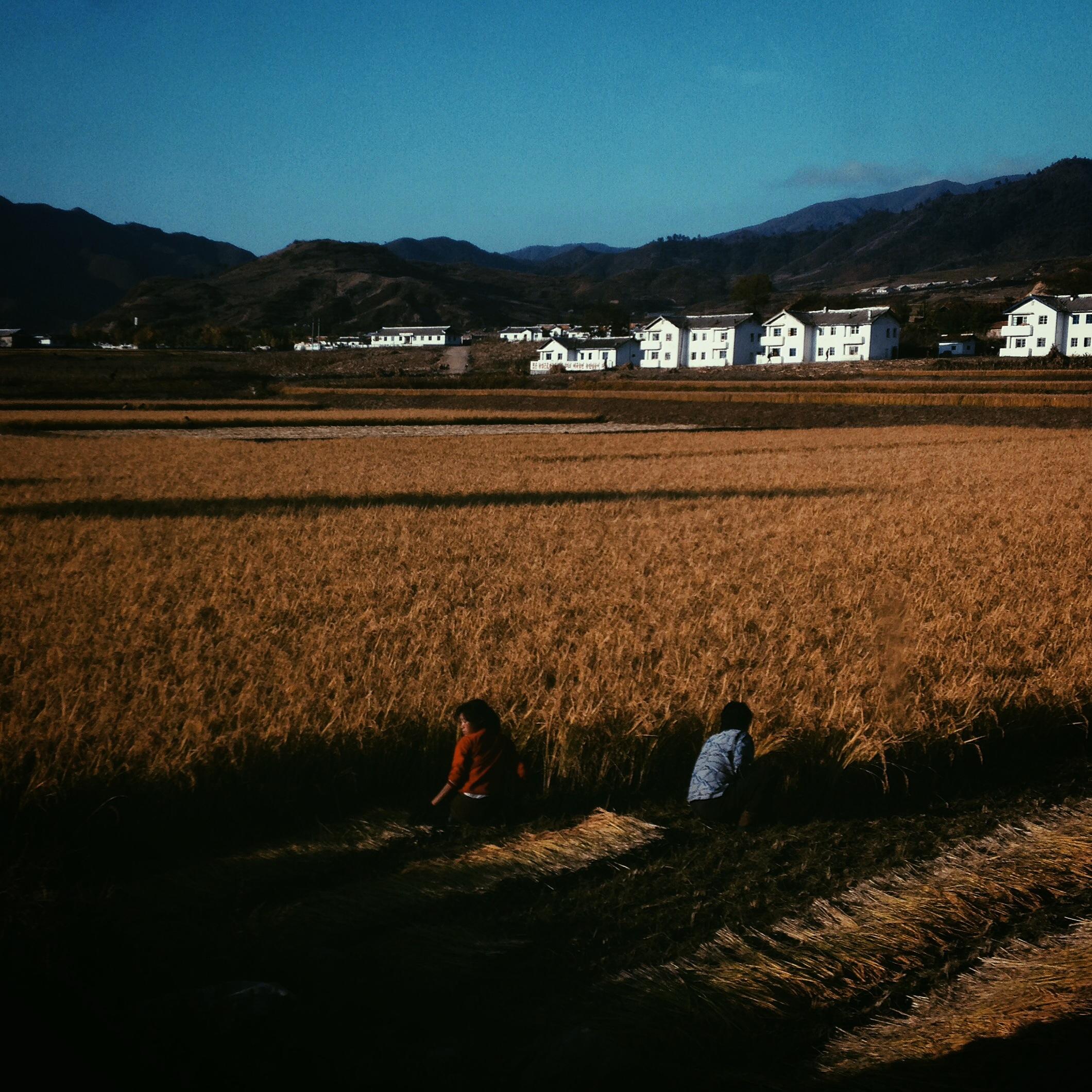 Harvest time outside a village near North Korea's Mt. Kumgang.