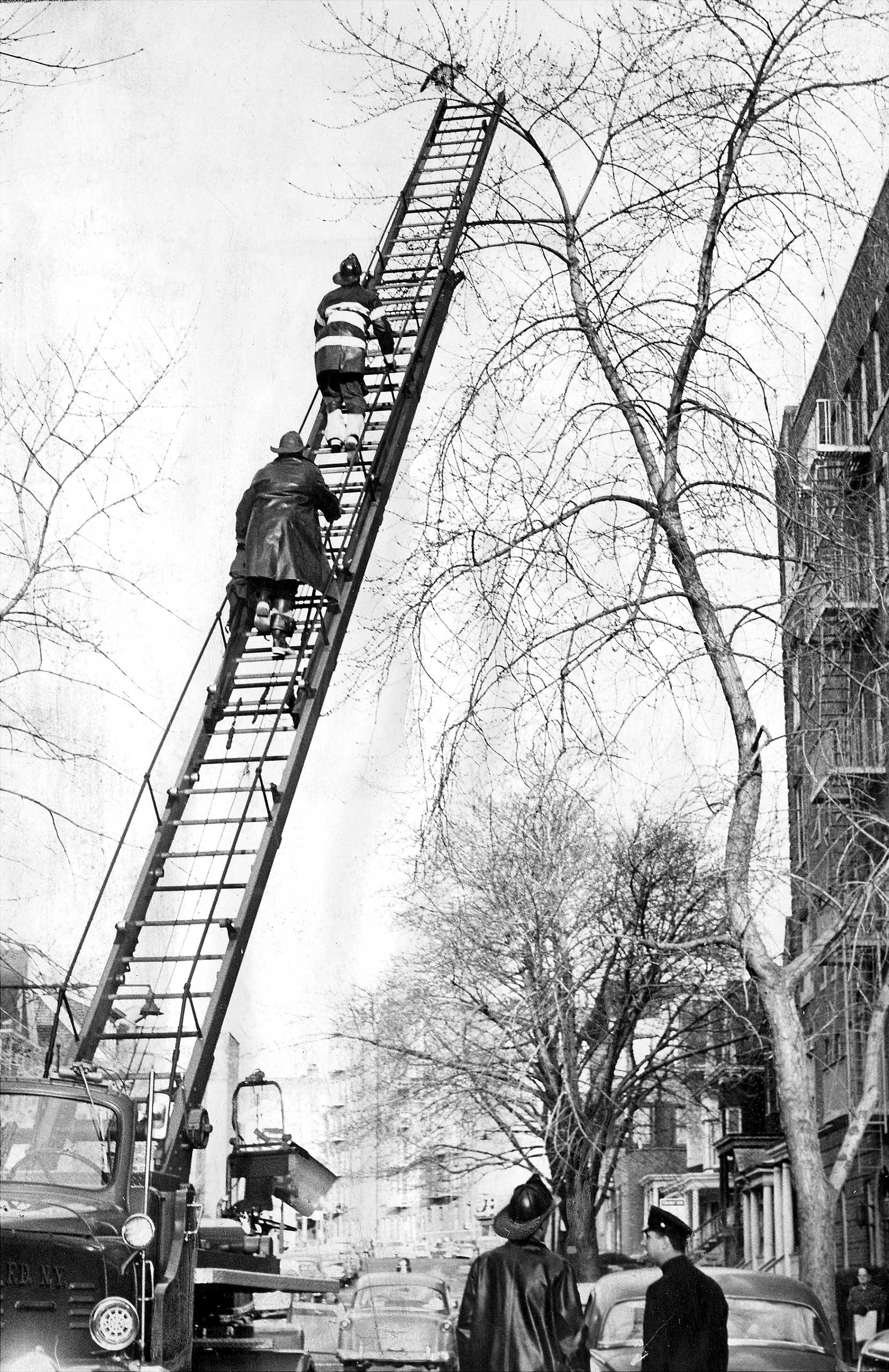 Firefighters in the Bronx borough of New York rescue a cat that was stuck in a tree for 26 hours in 1962.