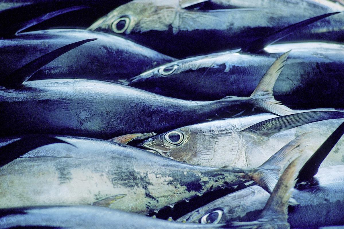 Fish at a market, circa 1980