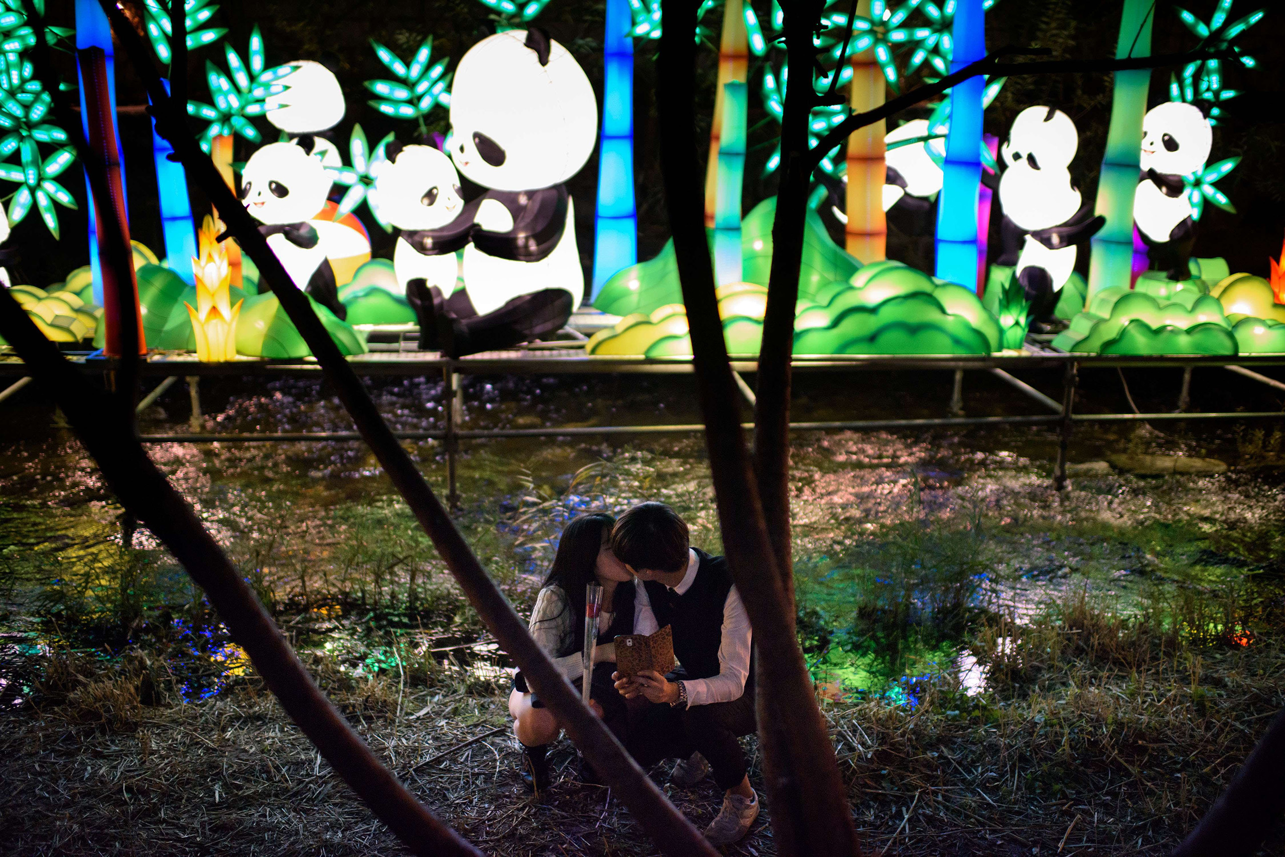 A couple kisses before a display of illuminated panda lanterns on the banks of the Cheonggyechun stream in central Seoul during the 6th annual lantern festival on Nov. 6, 2014.