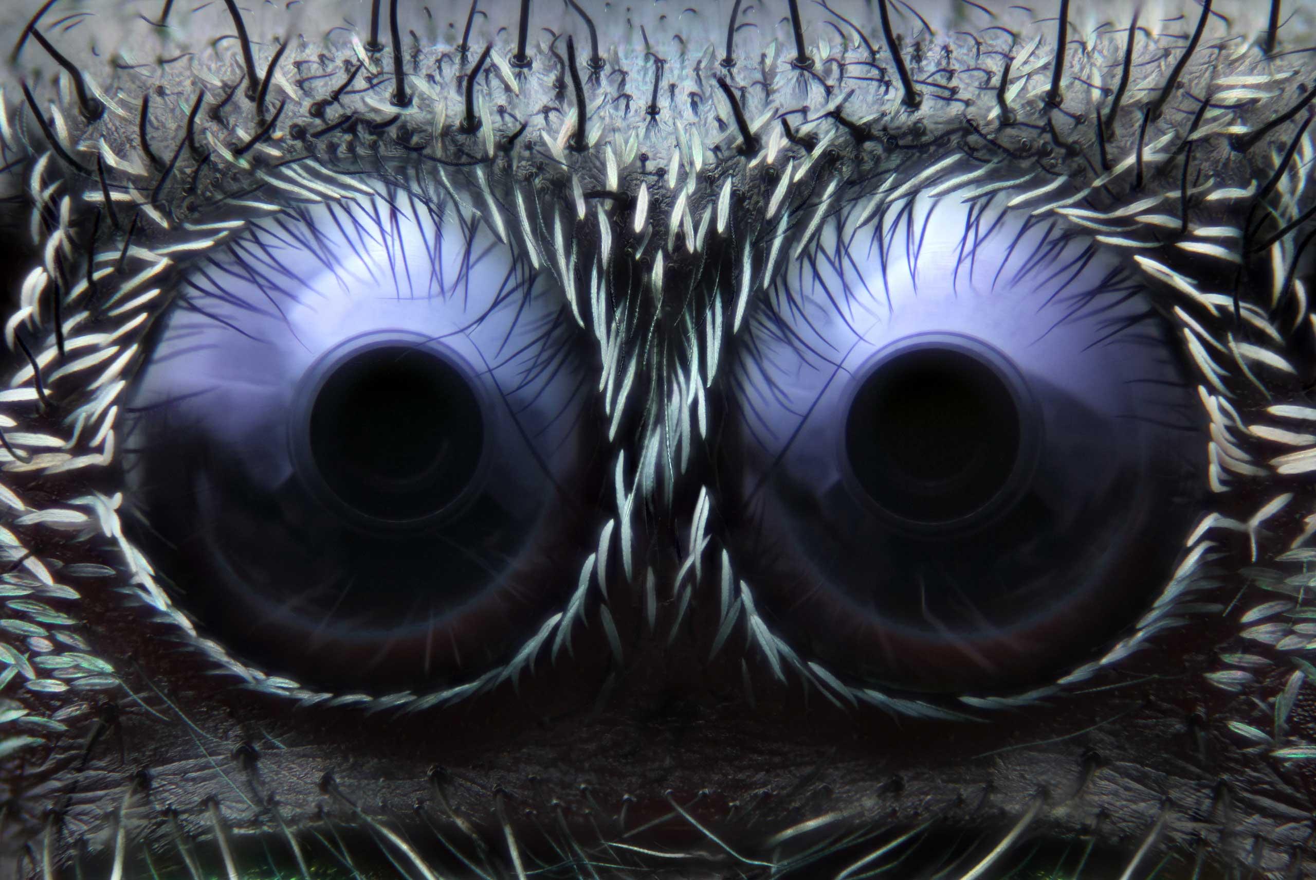 Jumping spider eyes at 20x magnification.