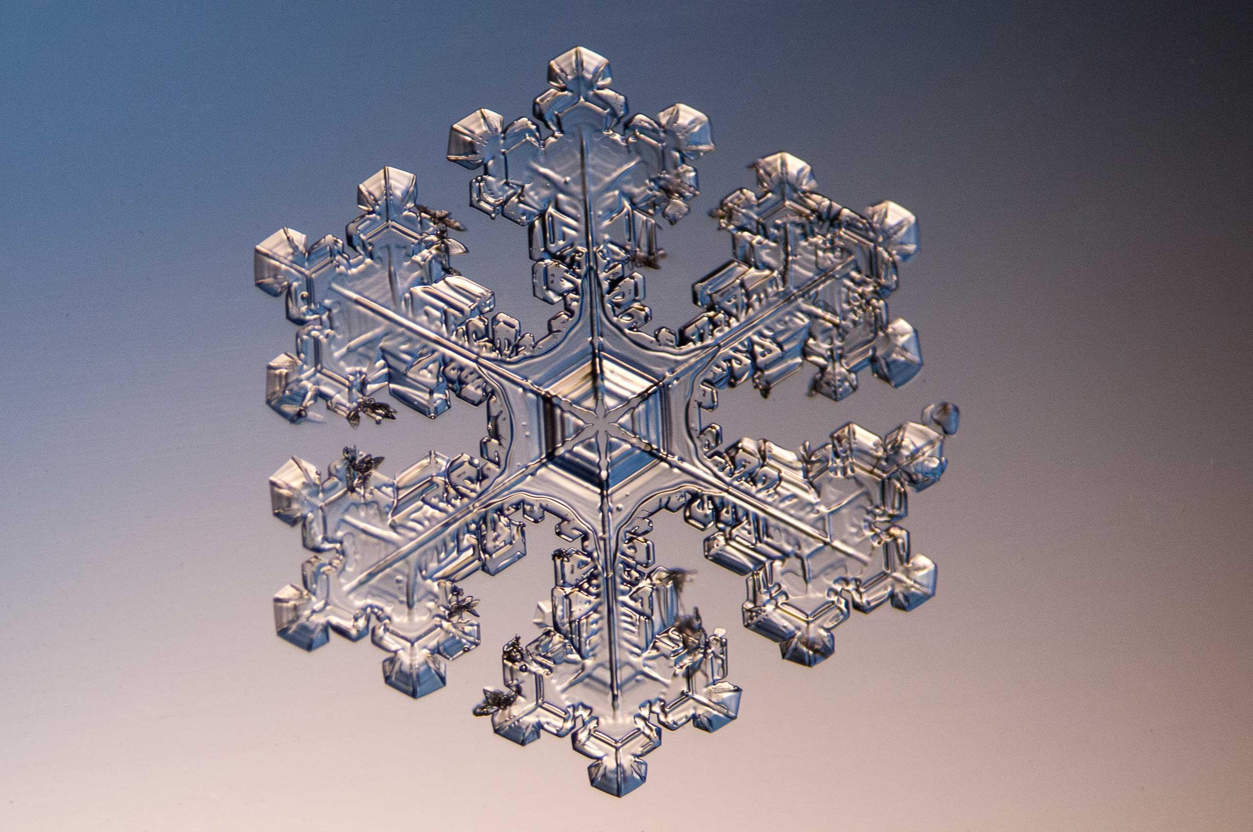 A snowflake at 8x magnification.