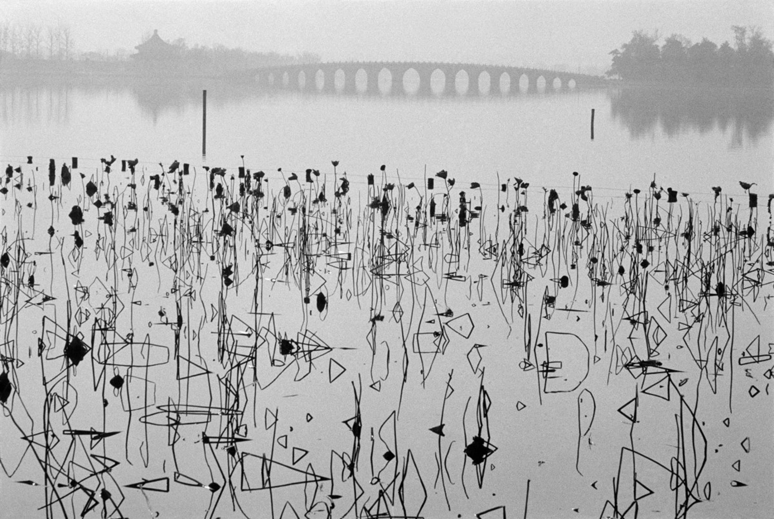 Dead lotus flowers on Kunming Lake at the former Summer Palace, Beijing. 1964.