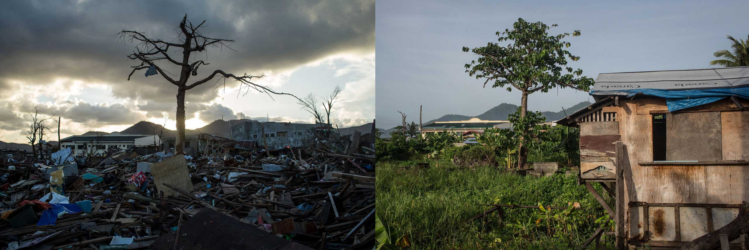 Before: A single tree is seen standing amid the rubble in Tacloban City following the recent super typhoon on Nov. 18, 2013 in Leyte, Philippines.After: View of residential area in Magallanes district one year after Typhoon Haiyan on Nov. 4, 2014.
