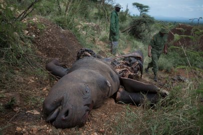 Poaching and wildlife conservation in Kenya