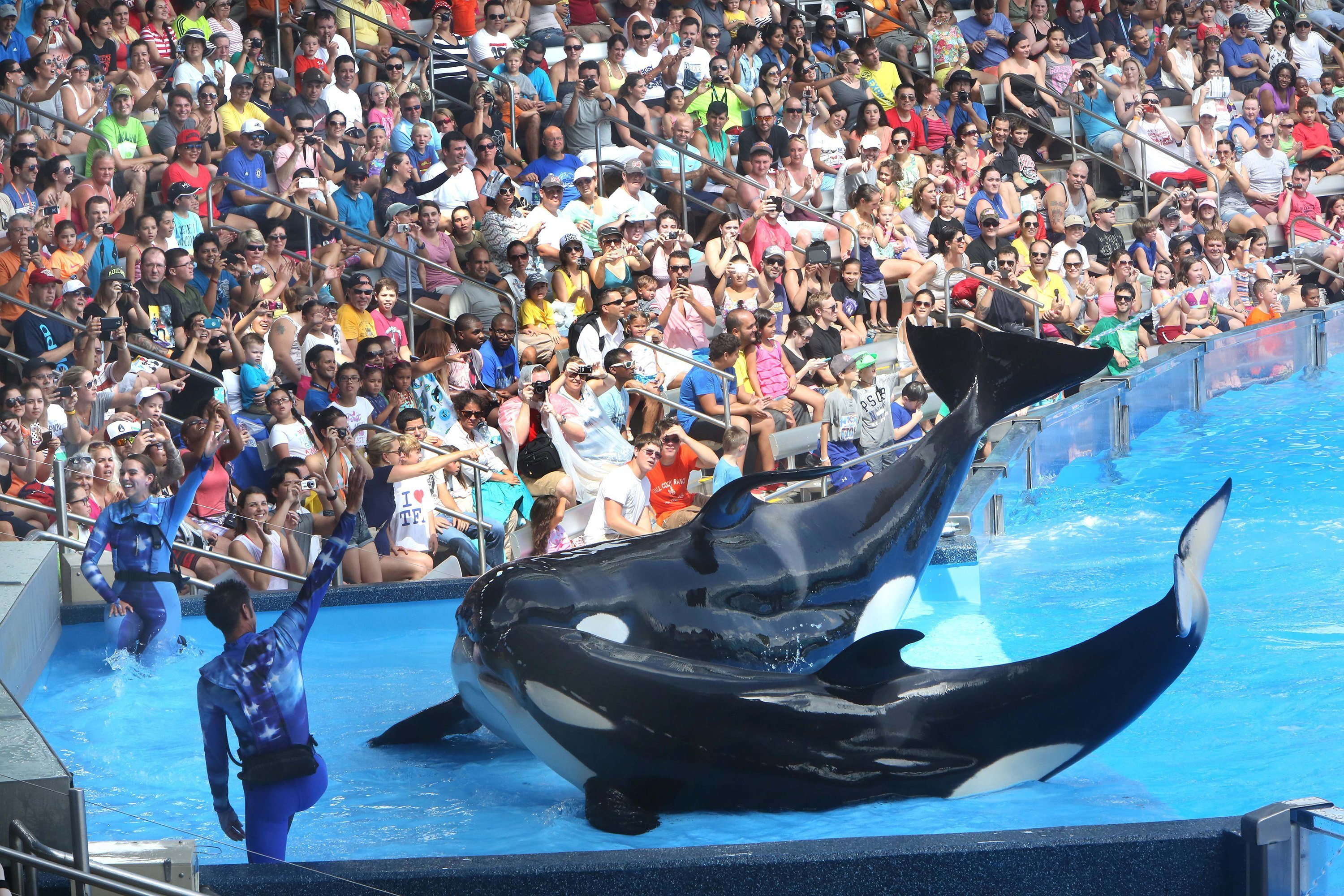 SeaWorld is heavily emphasizing conservation amid controversy over its killer whales.