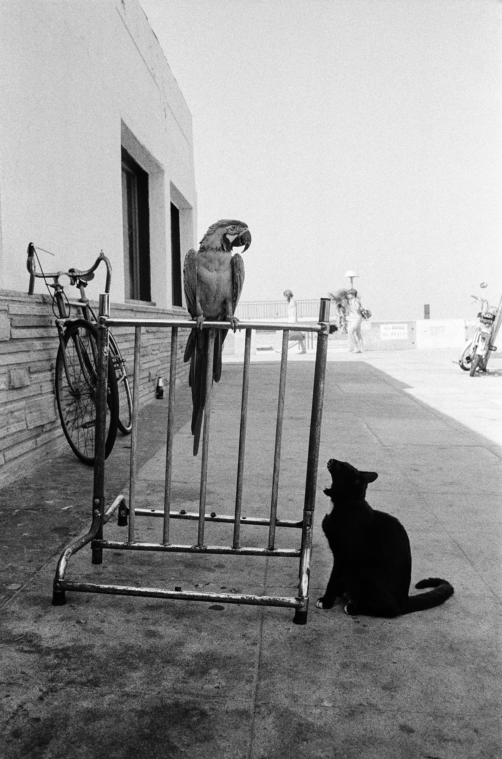 Bird & cat; Surf Hut Cafe.