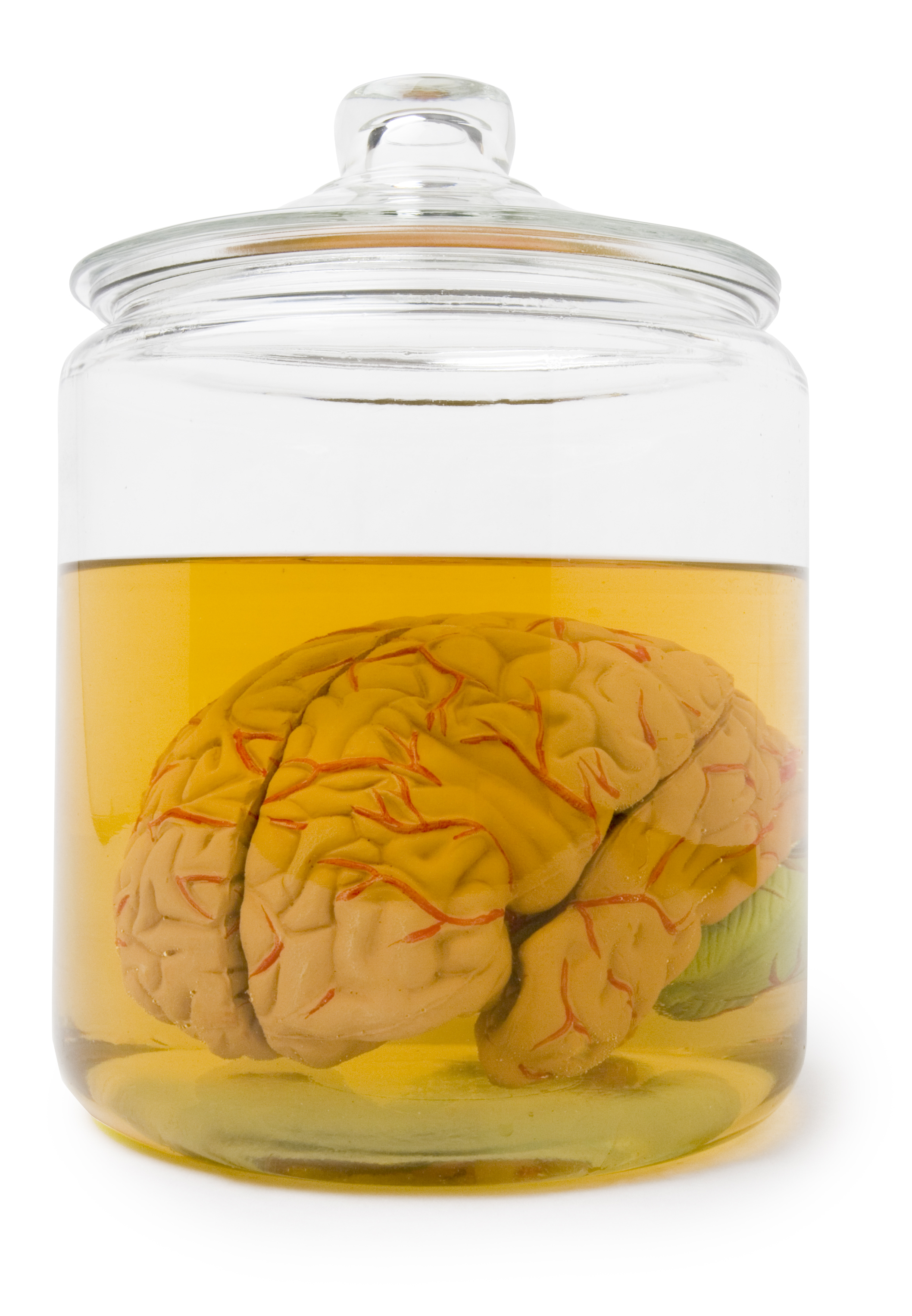 Brain in a jar with clipping path