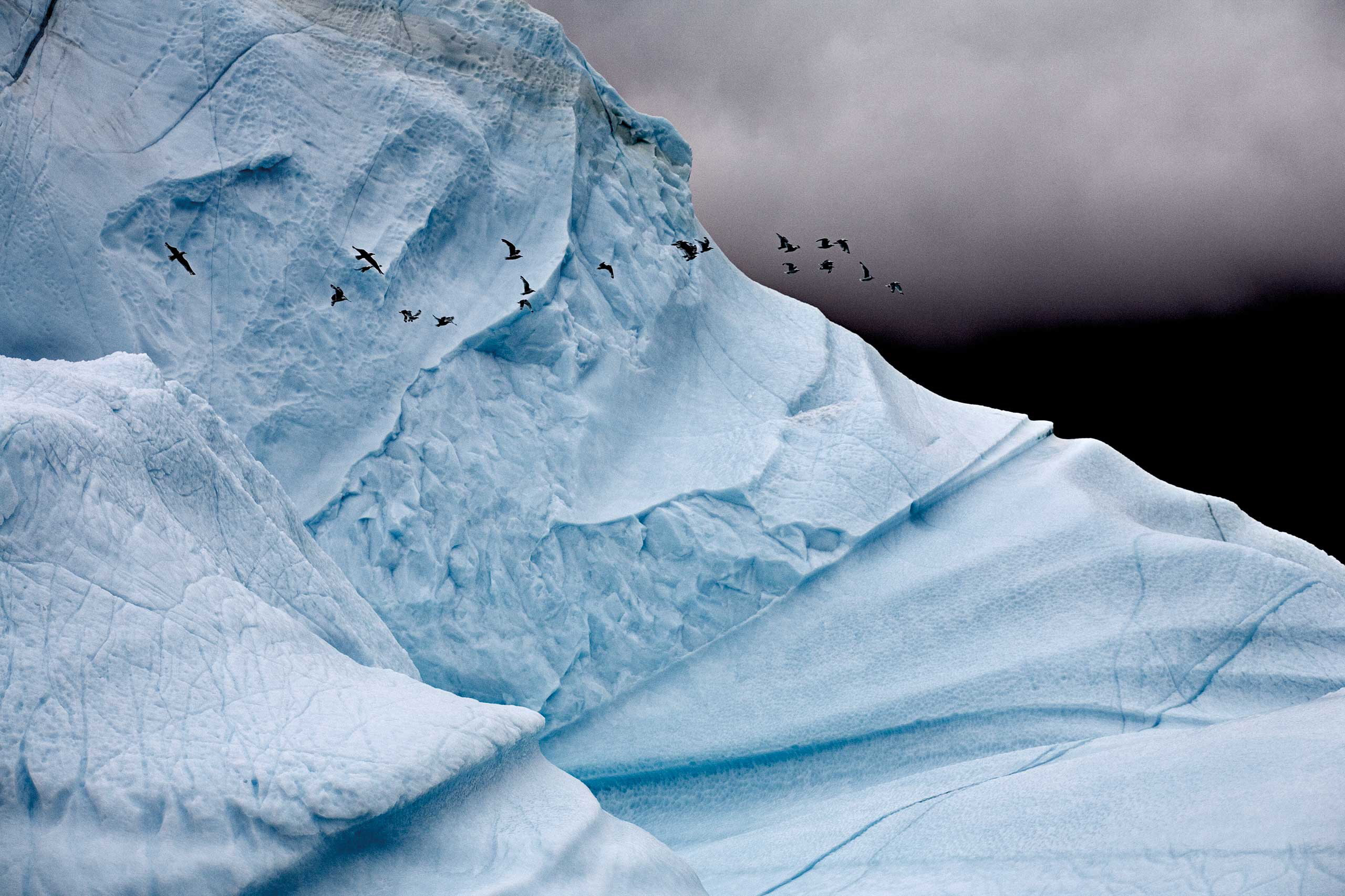 <i>Iceberg Detail with Kittiwake Gulls</i> Eastern Greenland, August 2006
