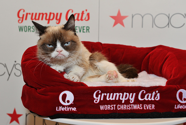 Grumpy Cat appears at Lifetime's Worst Christmas Ever event at Macy's Union Square in San Francisco on Nov. 21, 2014