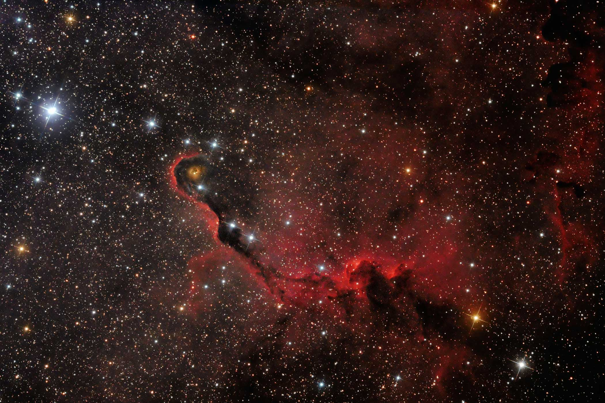 The Elephant's Trunk seems to uncoil from the dusty nebula on the right of the image, its tip curled around a cavity carved out by the radiation produced by young stars. Capturing a deep sky object like this takes skill and painstaking attention to detail and is a great achievement for a newcomer to astrophotography.