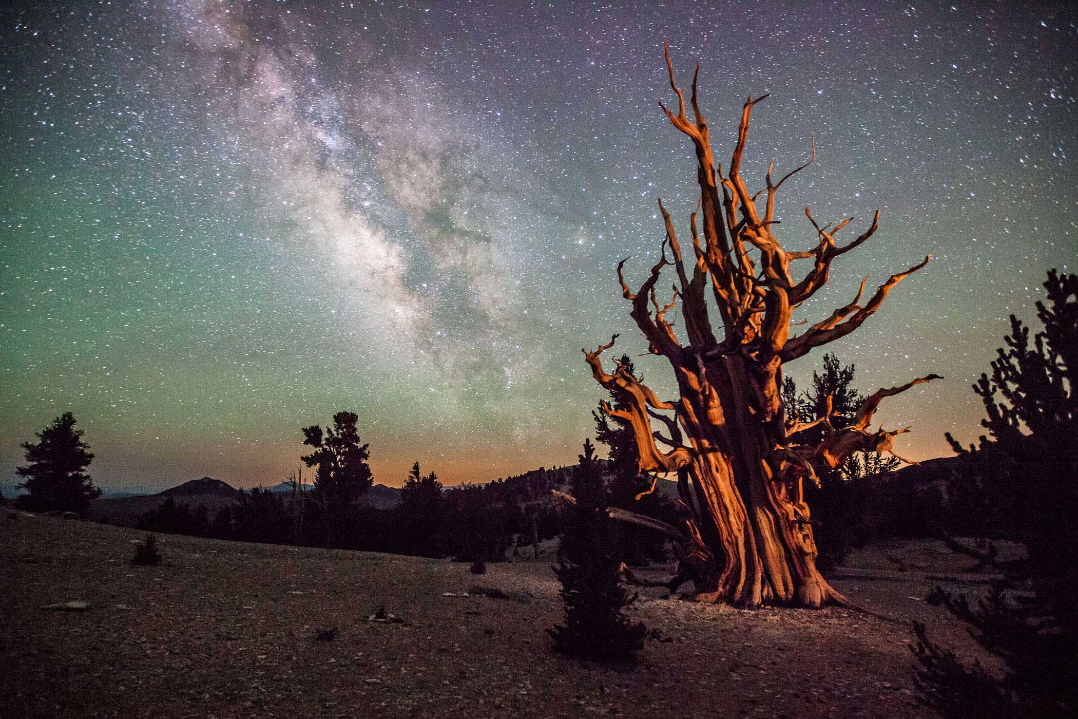 Earth and space are evenly weighted in this wonderfully framed image of a Californian landscape beneath the Milky Way.  The young photographer has chosen a view of an ancient bristlecone pine which is over 4,000 years old, and whose sloping trunk and gnarled branches provide perfect counterpoint to the edge-on view of the starry disc and knotted structure of our galaxy.