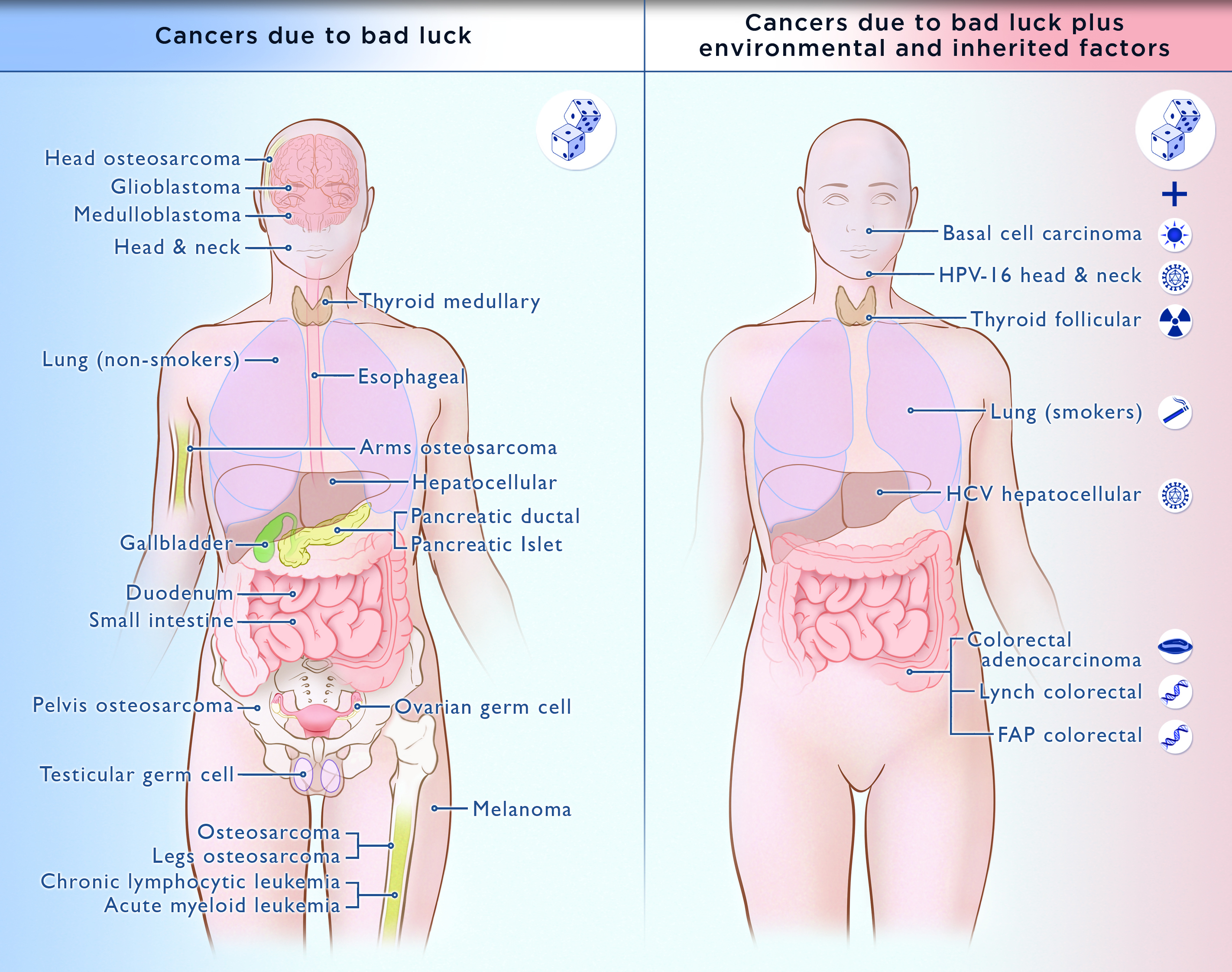 Breakthrough In Cancer Understanding Majority Of Cancer Is Beyond Our Control Time