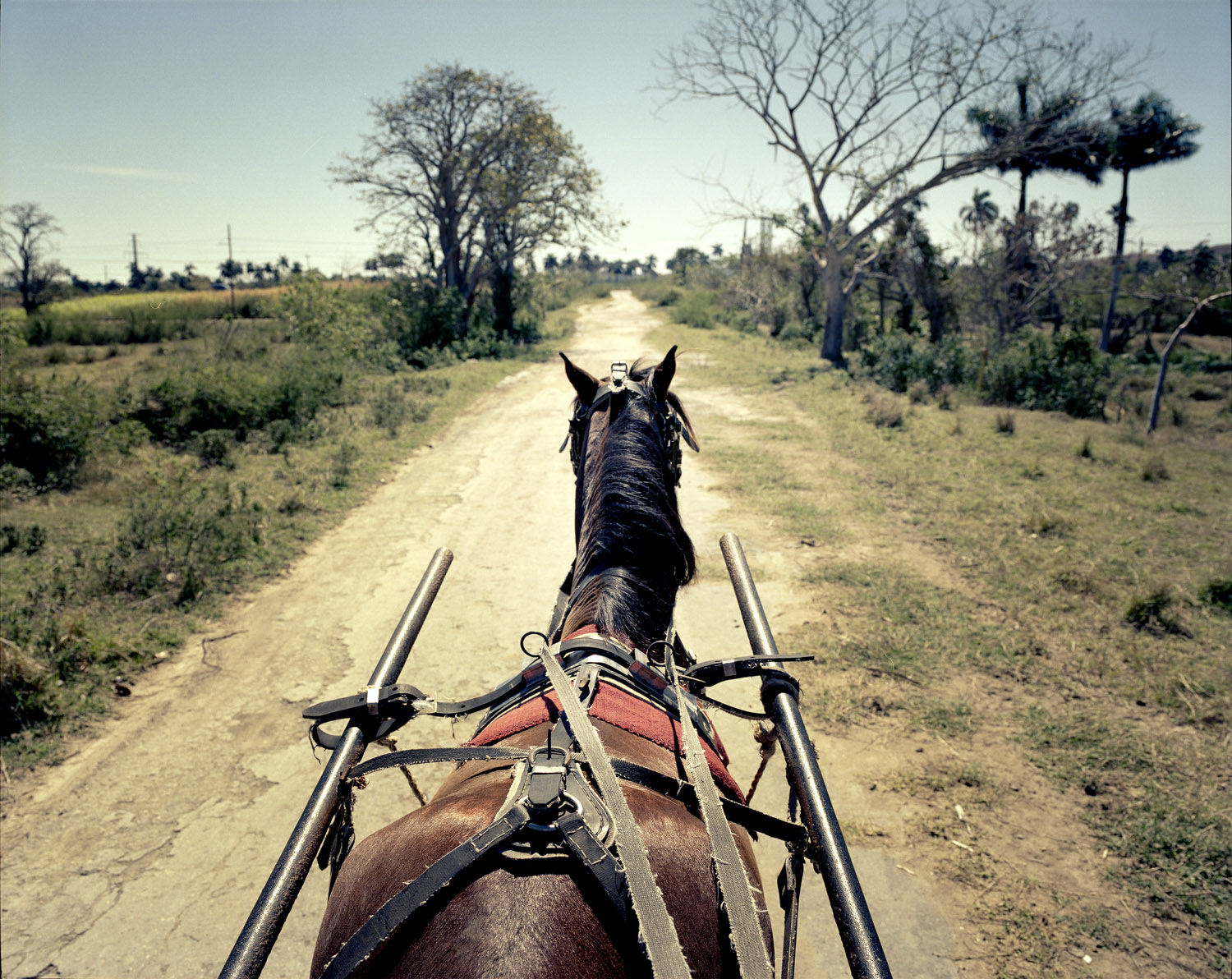 Riding on horse drawn carriages is still the main way to move in the Cuban countryside.