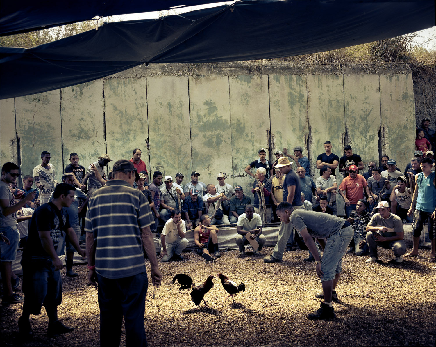 Cockfighting, a Cuban tradition, takes place in an anti-aircraft bunker to avoid the police. Fighting is not forbidden, but gambling, which is always present at the matches, is.