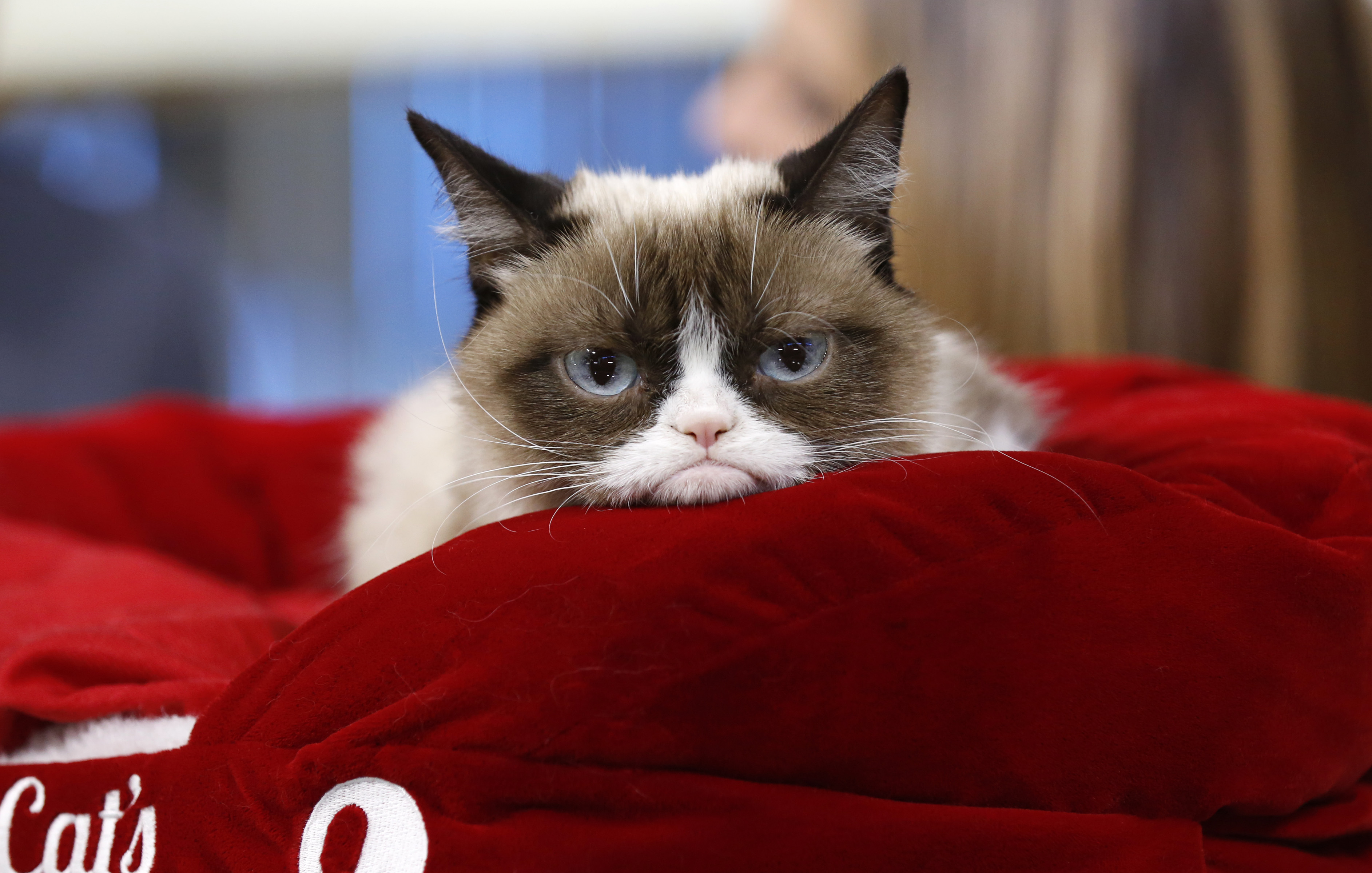 Grumpy Cat appears on NBC News'  Today  show .